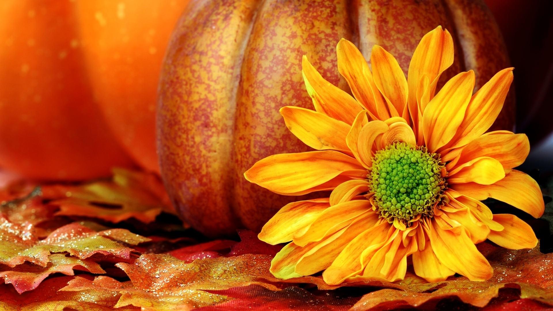 Backgrounds For 3d Fall Pumpkin Desktop Backgrounds Www .
