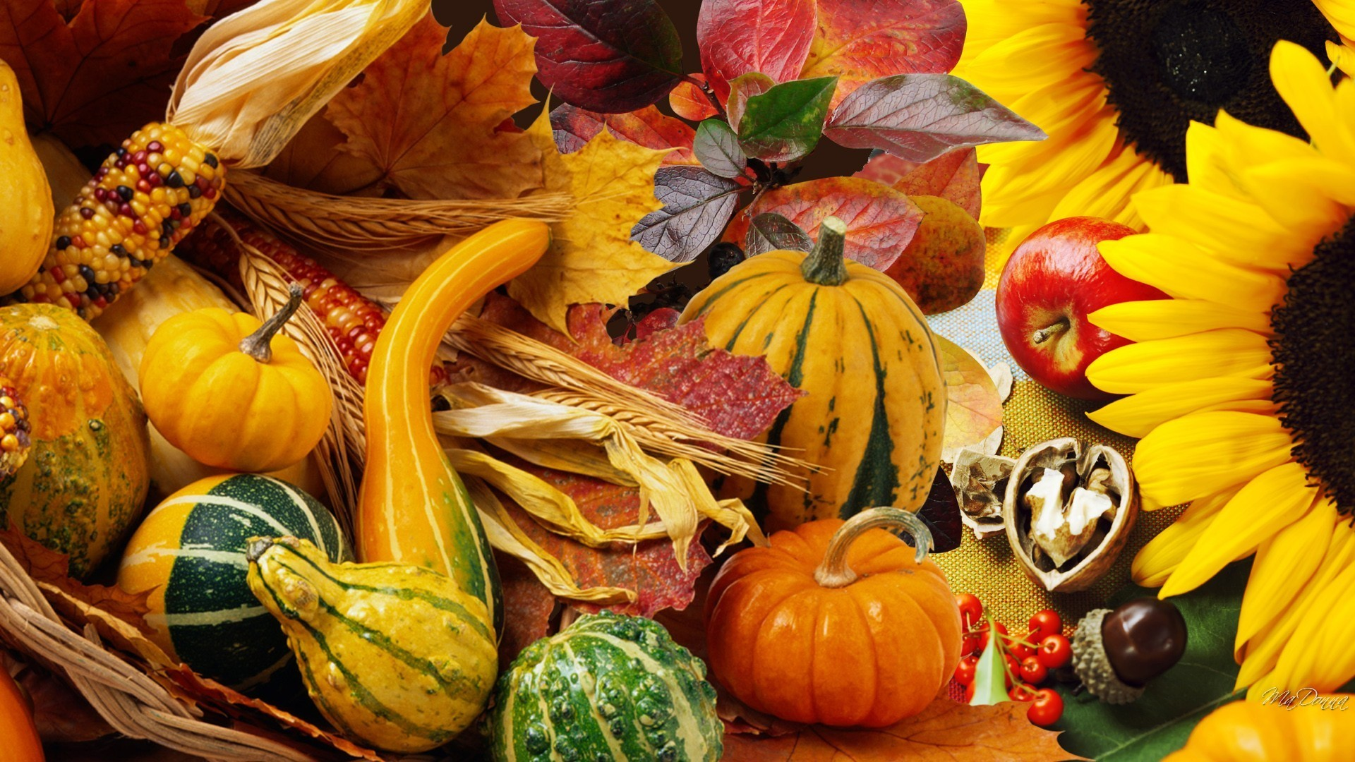 Thanksgiving Tag – Autumn Vegetables Fall Pumpkin Nuts Leaves Garden Apples  Harvest Squash Sunflowers Acorns Gourds