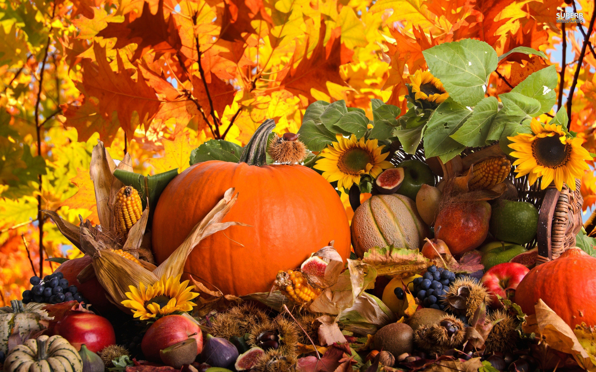 Autumn harvest wallpaper jpg