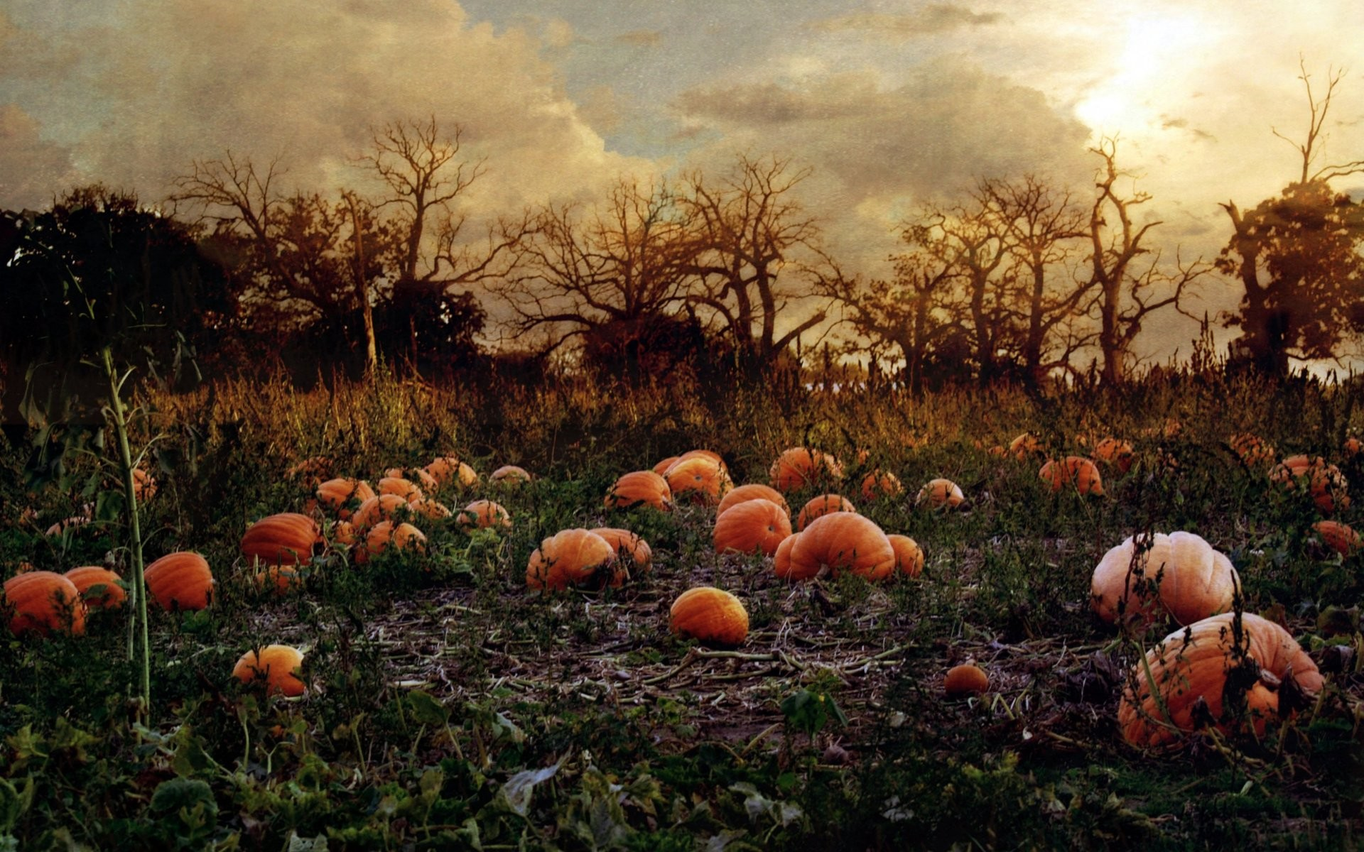 Free Images Pumpkin Wallpapers HD.