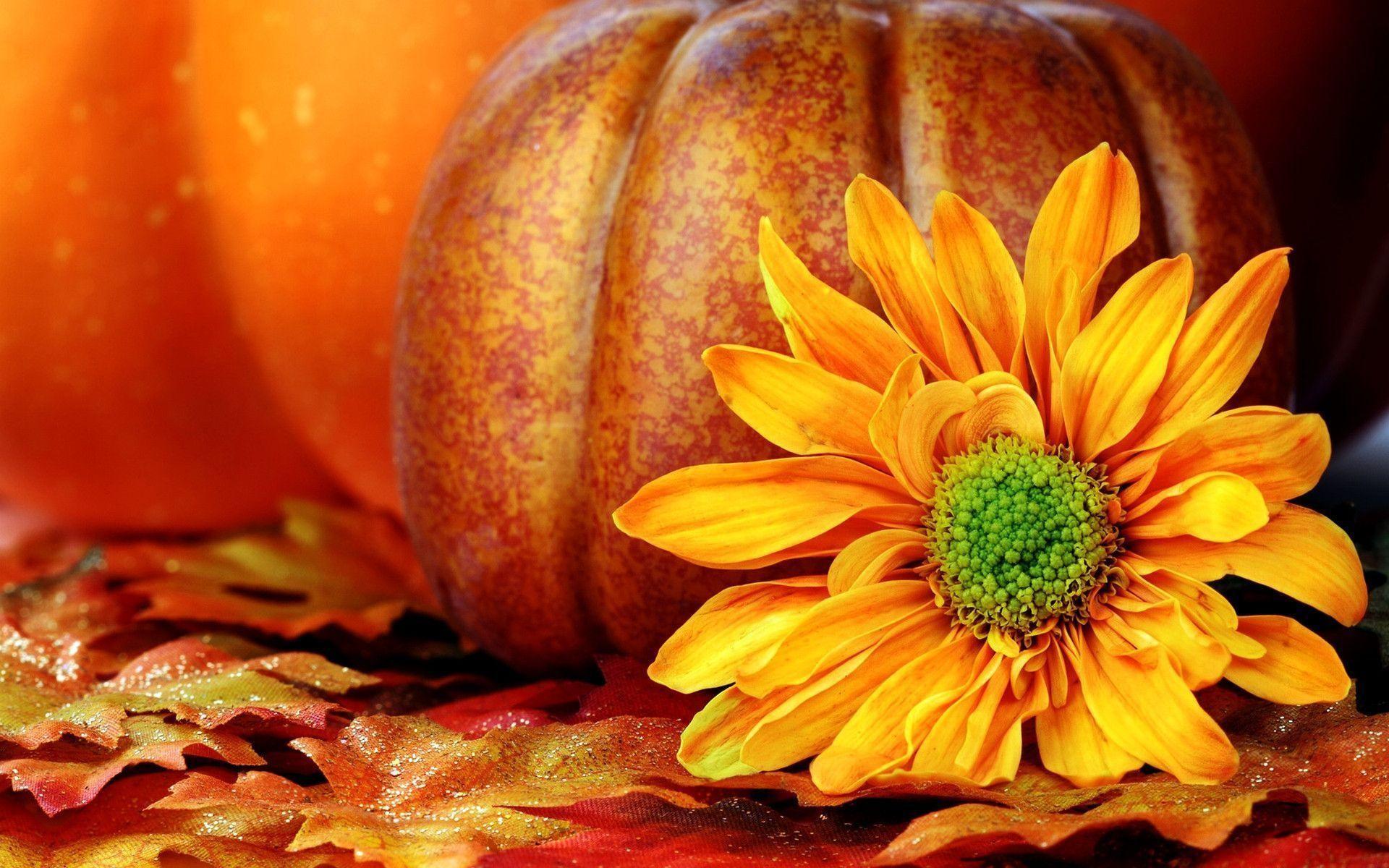 Autumn Pumpkin Wallpaper – Wallpaper HD