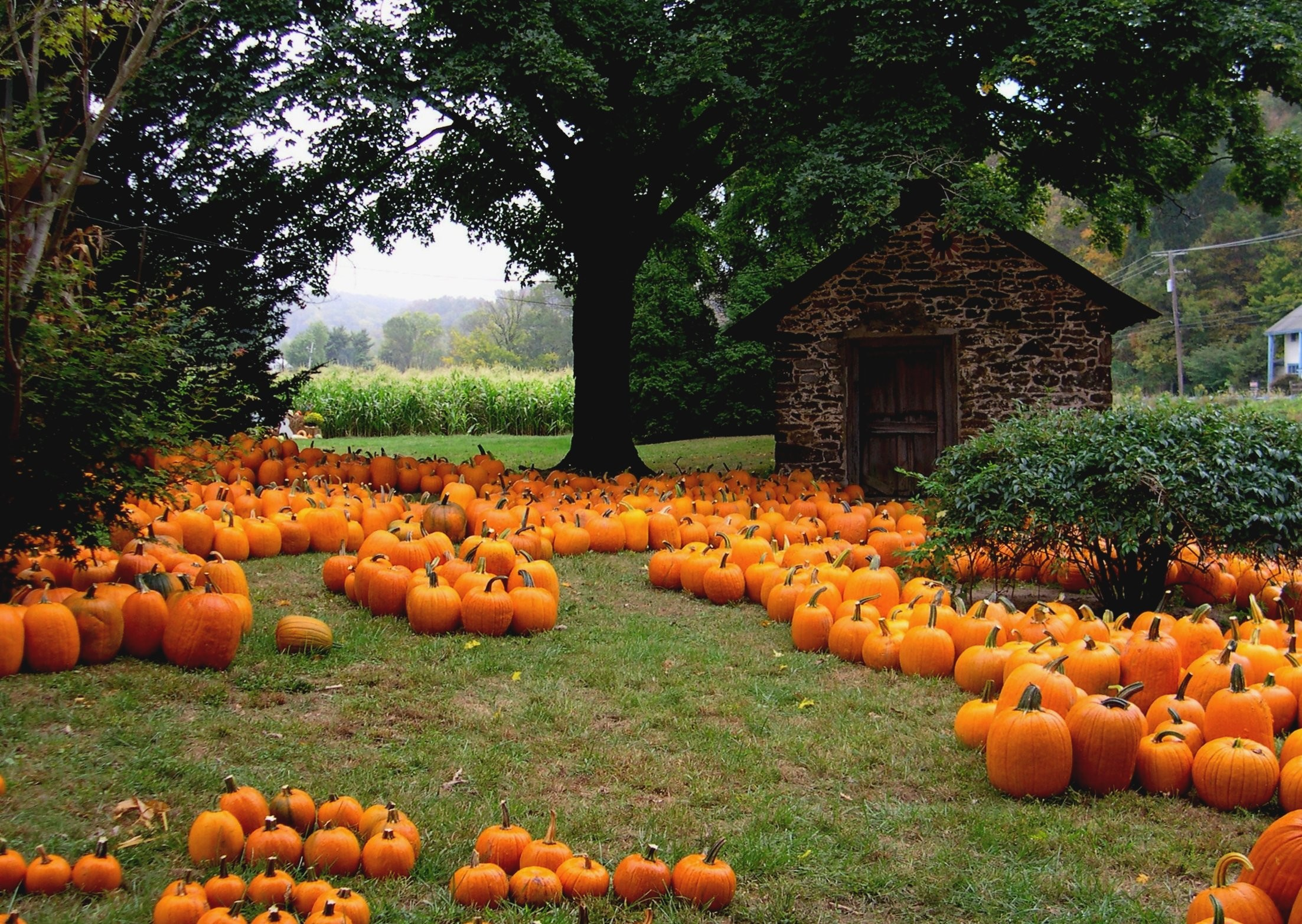 11 Things To Do In The Fall With Your Friends