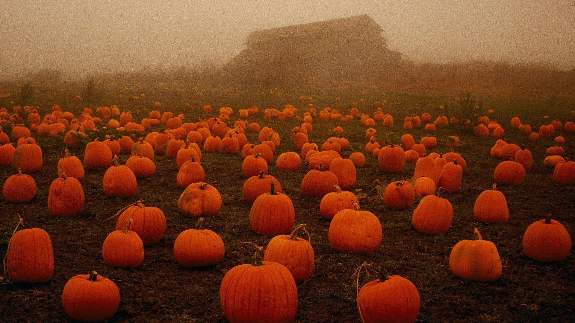 8. pumpkin-wallpaper8-600×338