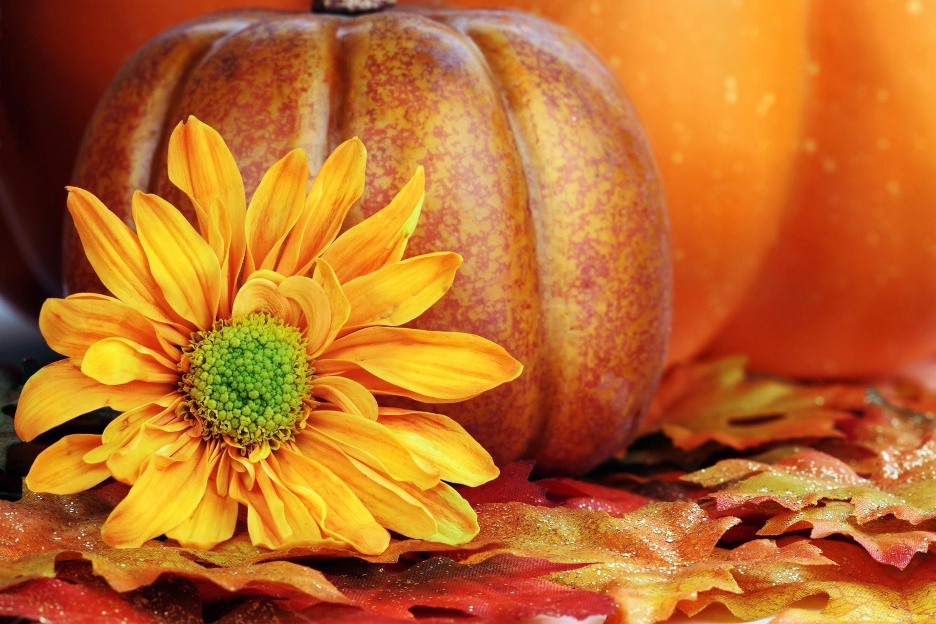 autumn pumpkin wallpaper total -#main