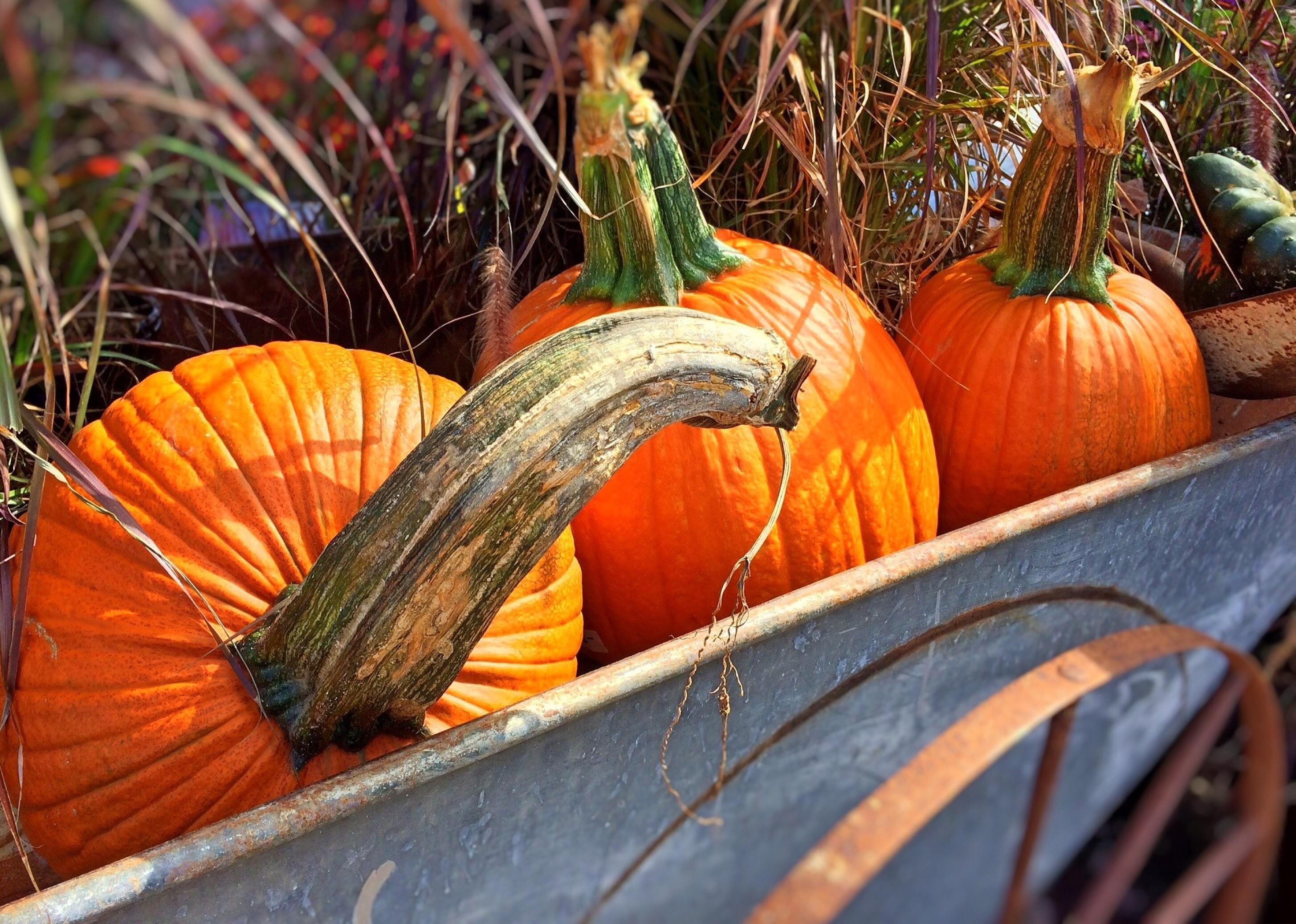 Fall, Halloween, Pumpkins, Autumn, pumpkin, orange color