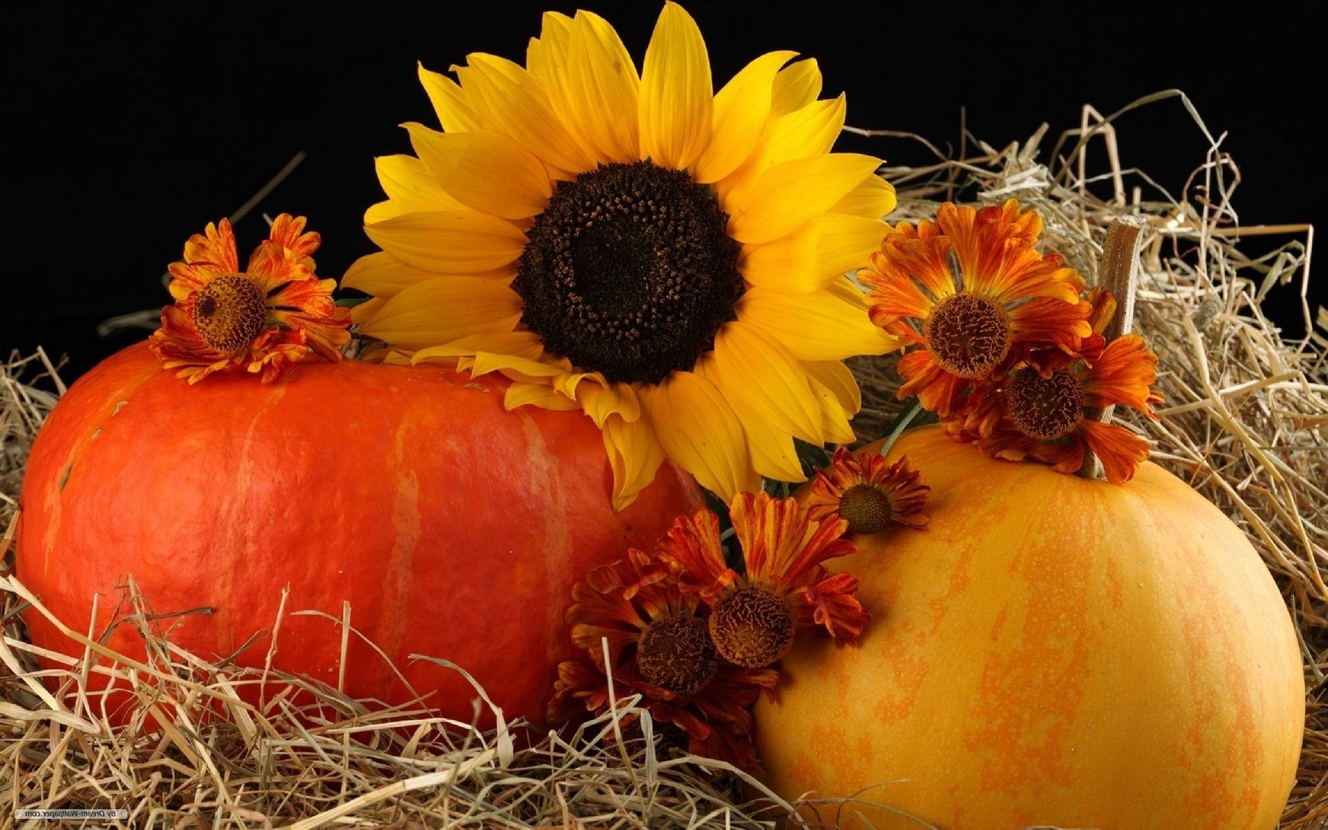… sunflower pumpkin autumn wallpaper …