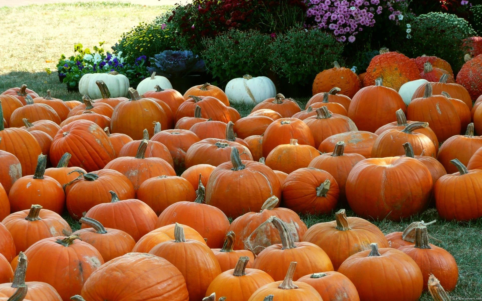 … Fall Pumpkin Wallpaper for Desktop WallpaperSafari