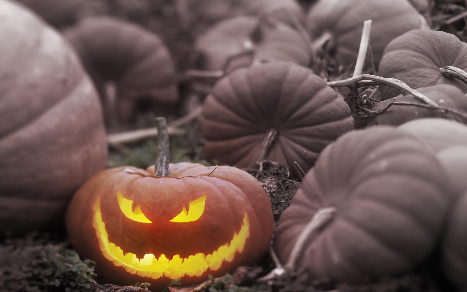 Light Halloween Pumpkin Backgrounds.