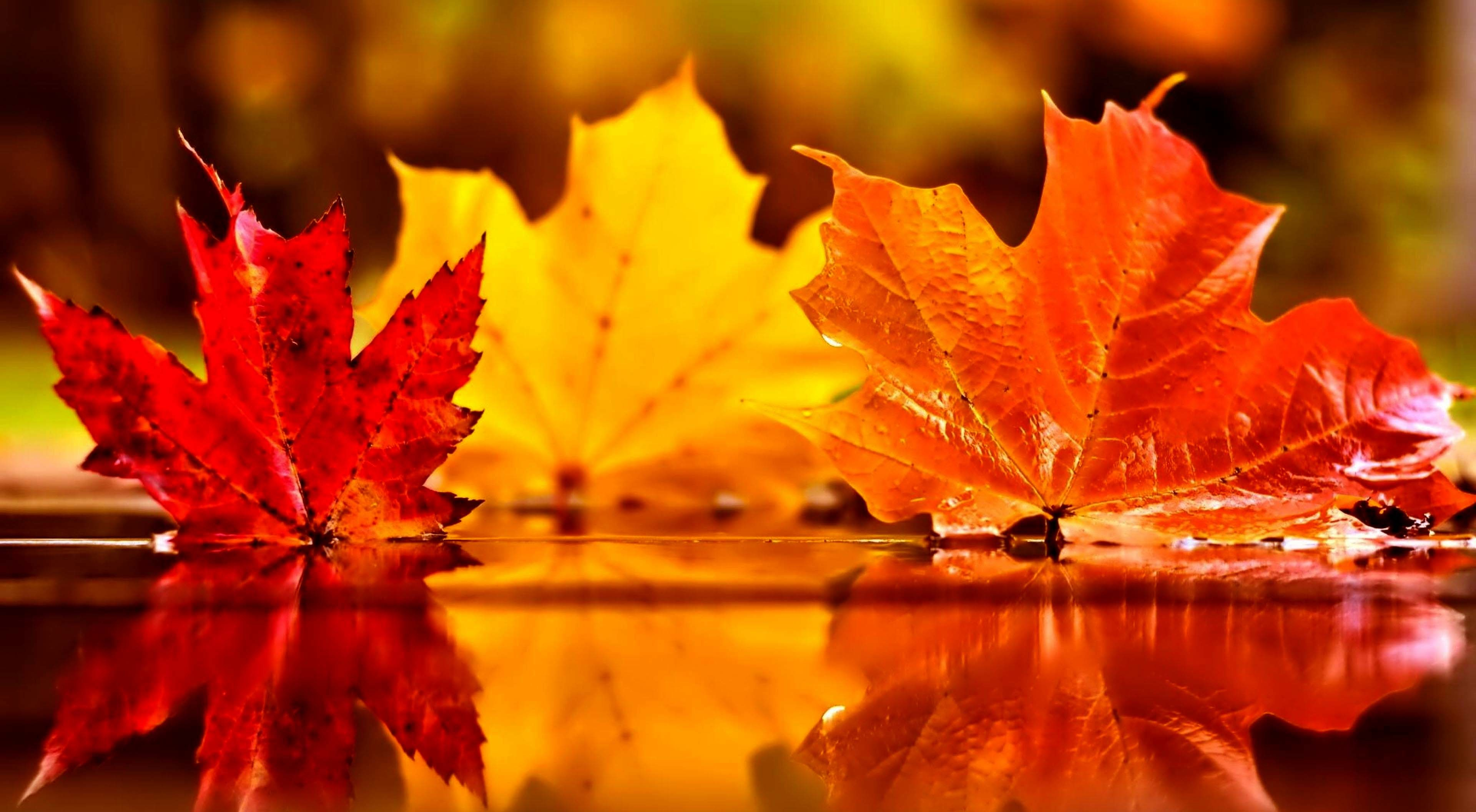 Cute Fall Pumpkins Wallpaper | Pumpkins Halloween Wallpaper Free Download |  Fall pictures | Pinterest | Timeline covers