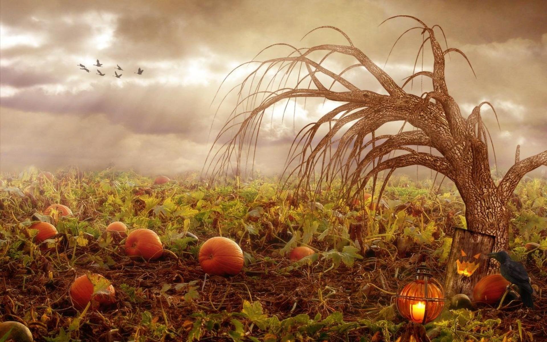 Pumpkin patch halloween autumn wallpaper | | 480122 | WallpaperUP