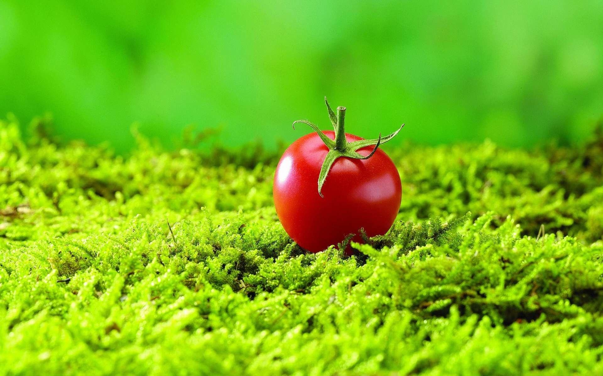 Food – Tomato Wallpaper