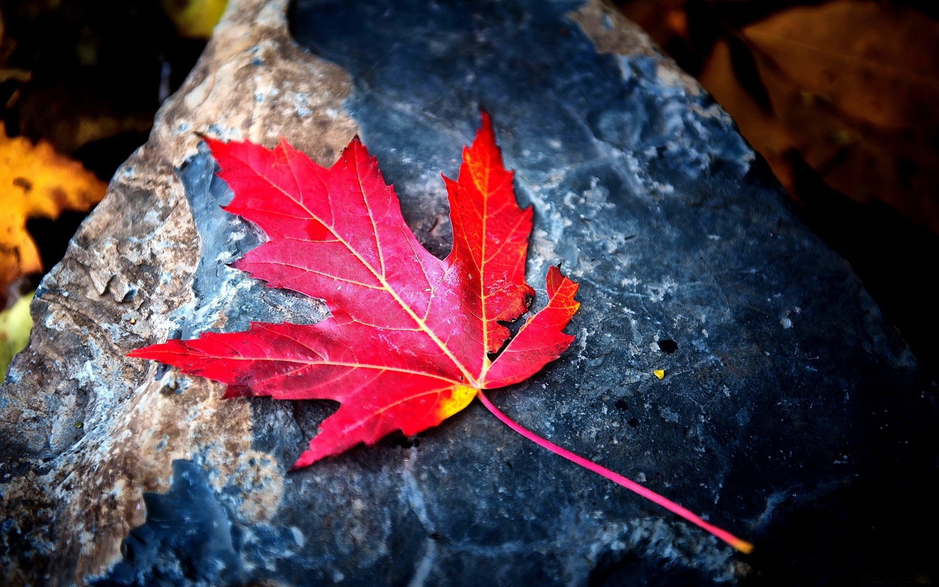 Fantastically colorful leaf, more such nice quality hd wallpapers for your  desktop background for you
