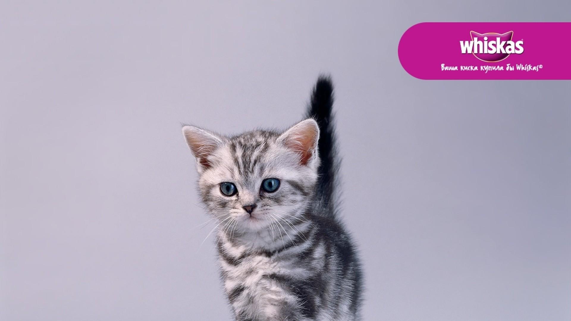 Wallpaper whiskas, cat, cute, food