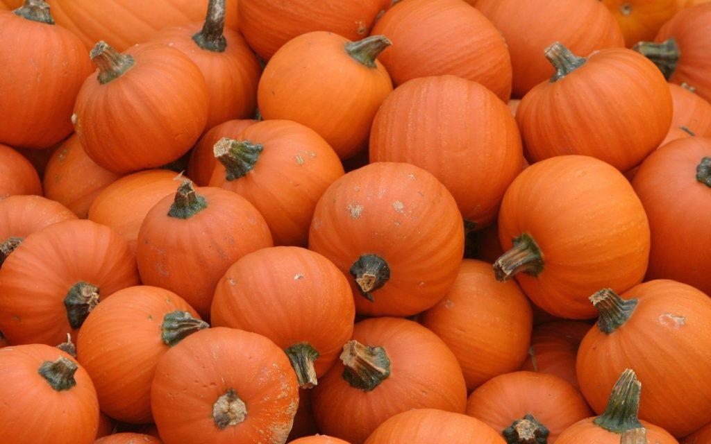pumpkin desktop wallpaper – www.wallpapers-in-hd.com