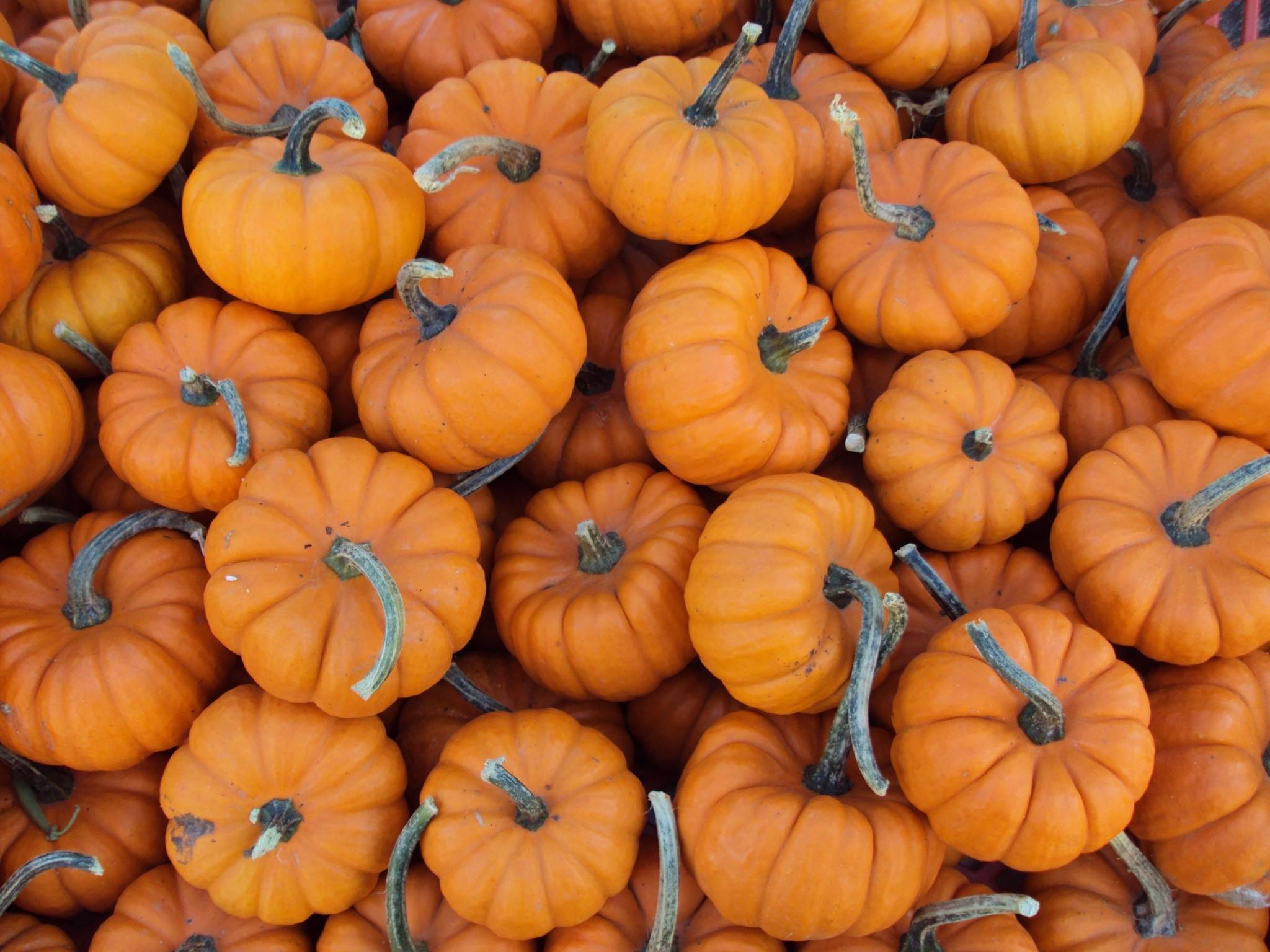 pumpkin backgrounds for desktop hd backgrounds