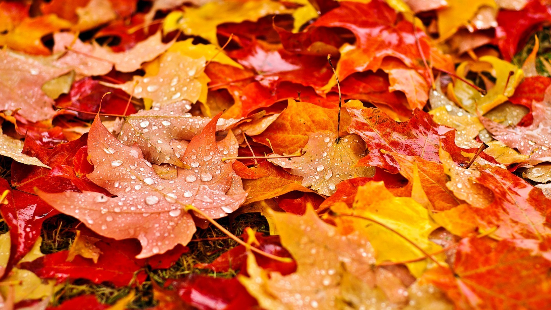 Fall Leaves Wallpapers Hd Resolution