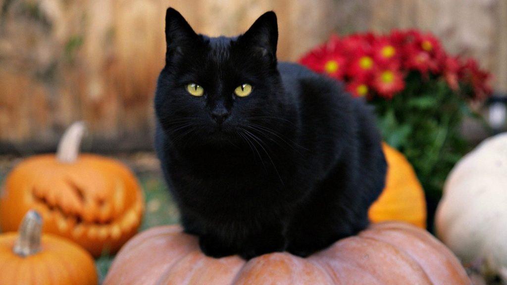Black-Cat-On-Top-Of-a-Pumpkin-Wallpaper-
