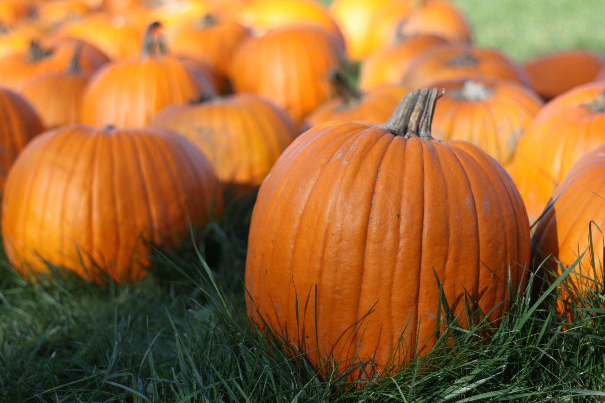 pumpkin late backgrounds desktop