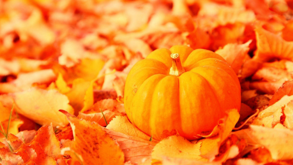 … by a keyword 'lot backgrounds pumpkin'. All images were carefully  selected for you in the global network and can only be used by the author's  right.