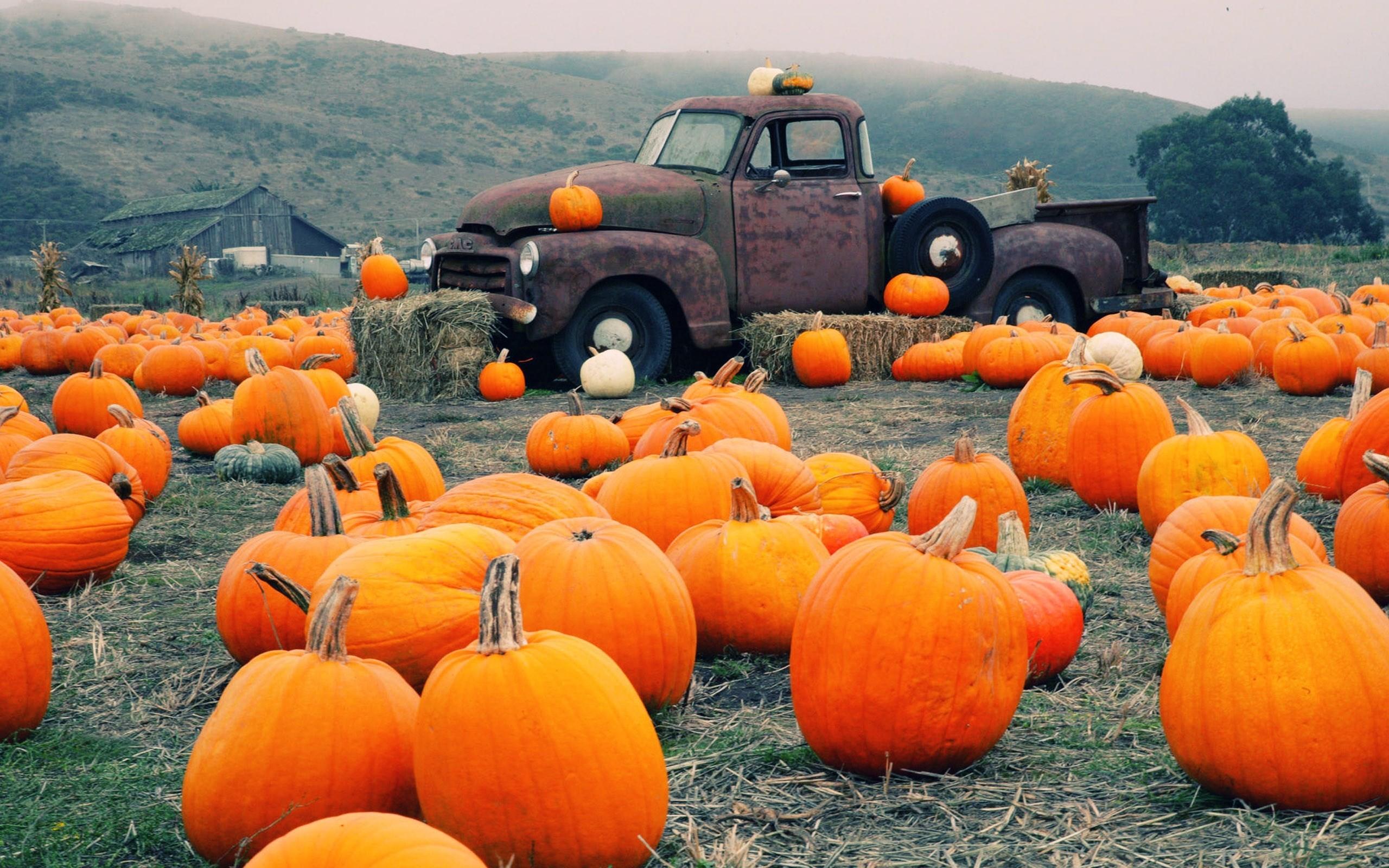 pumpkin – Full HD Wallpaper, Photo 2560×1600