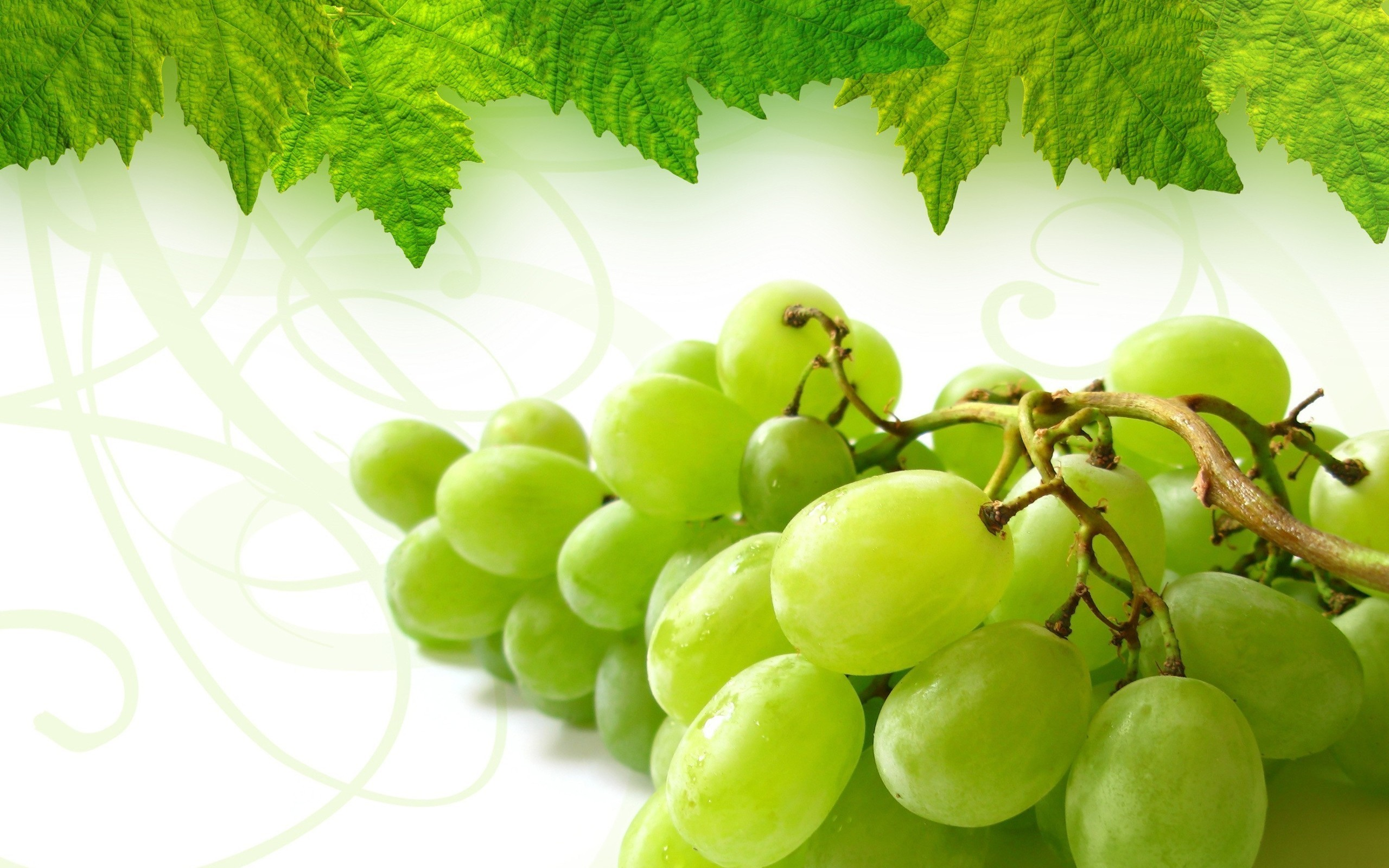 Free download grapes hd wallpaper for laptop