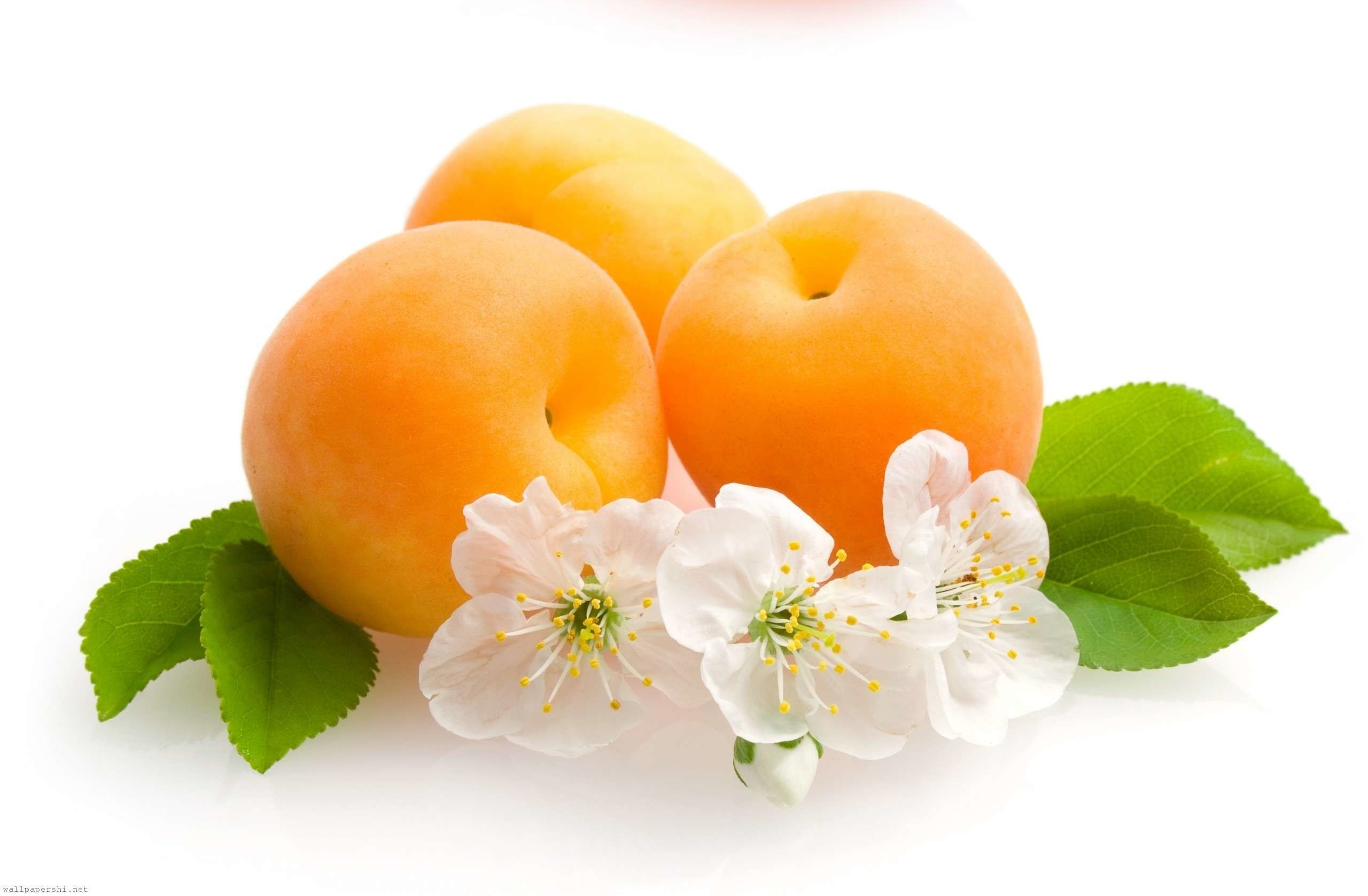 Apricot Fruit Wallpaper HD Desktop Images