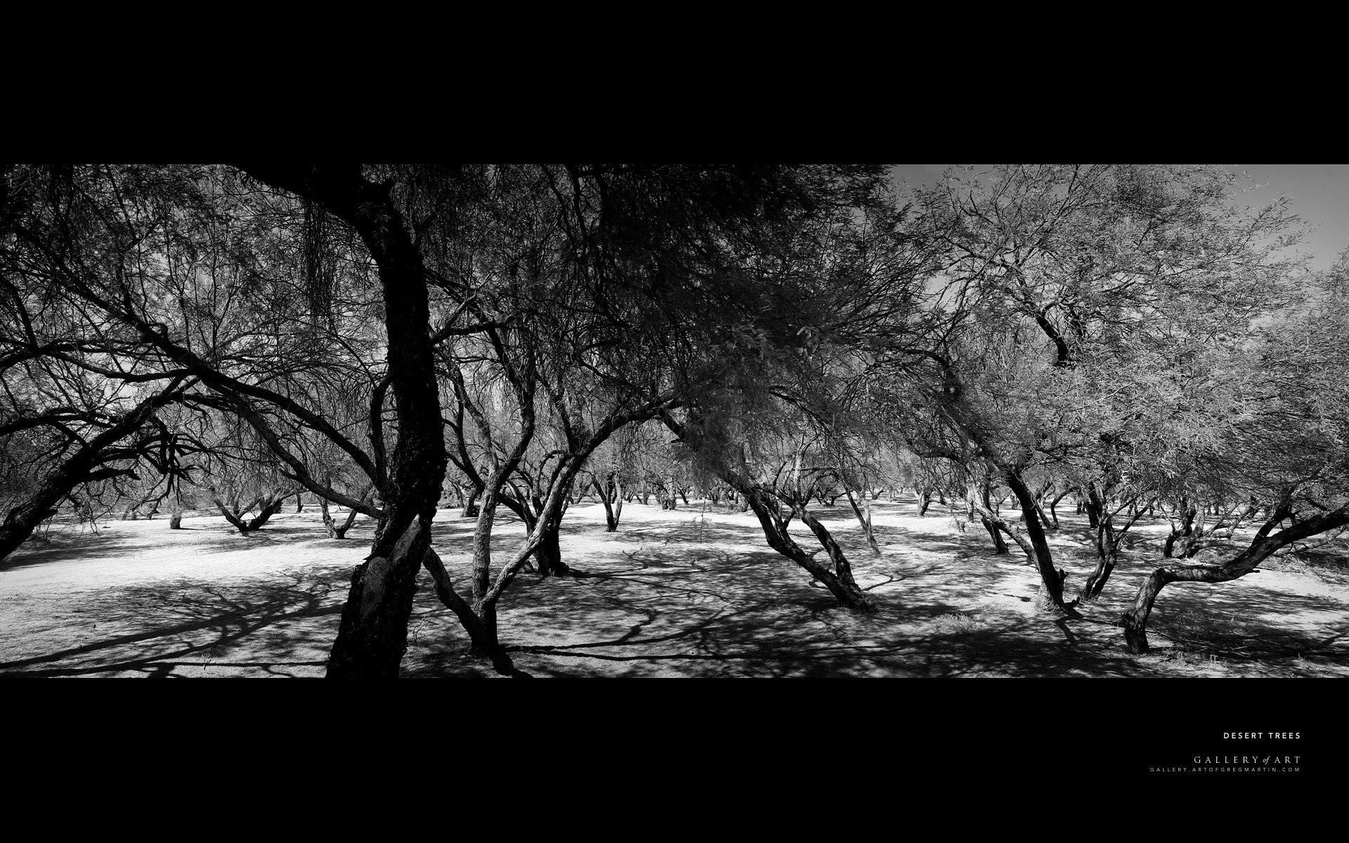 … black and white forest wallpaper 549413 walldevil …