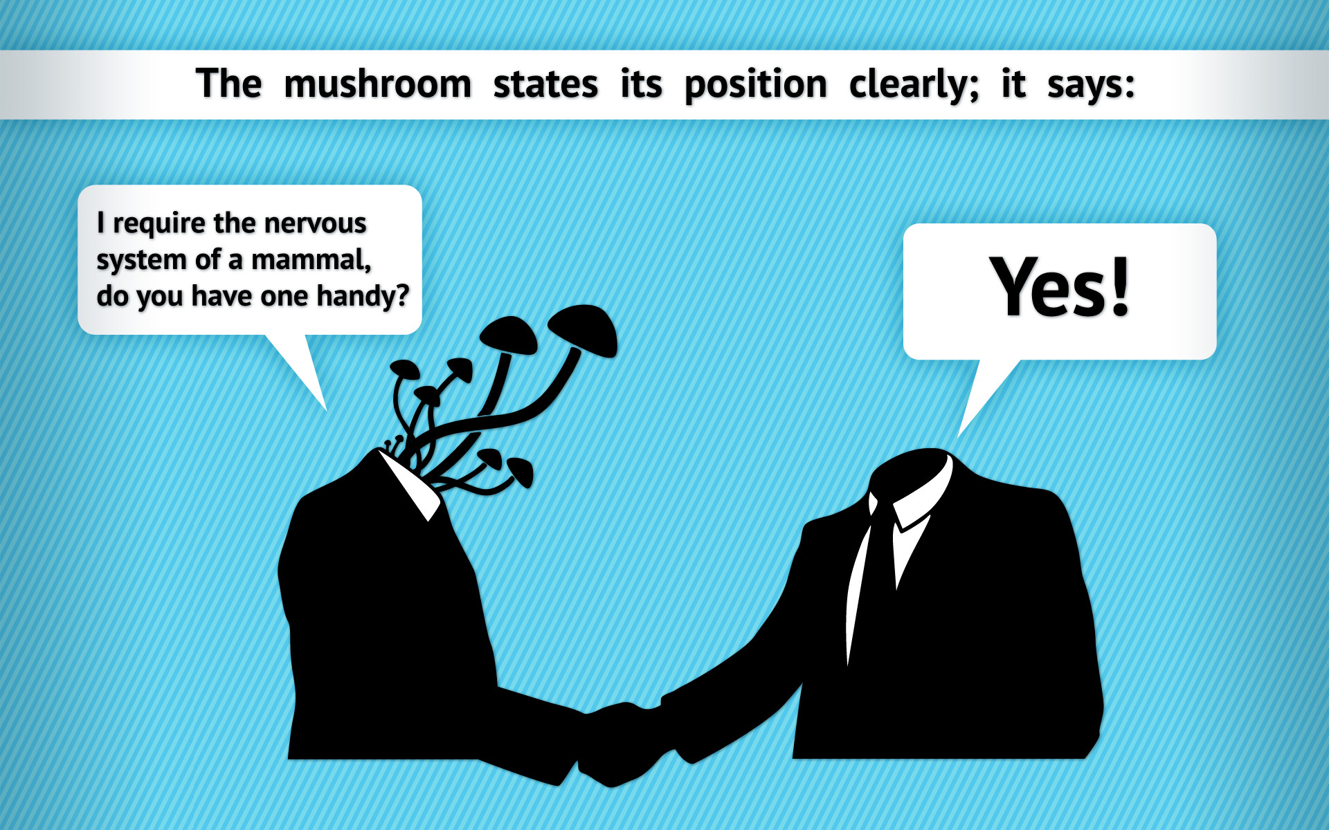Mushroom Wallpapers Mushroom Wallpapers – Full HD wallpaper search