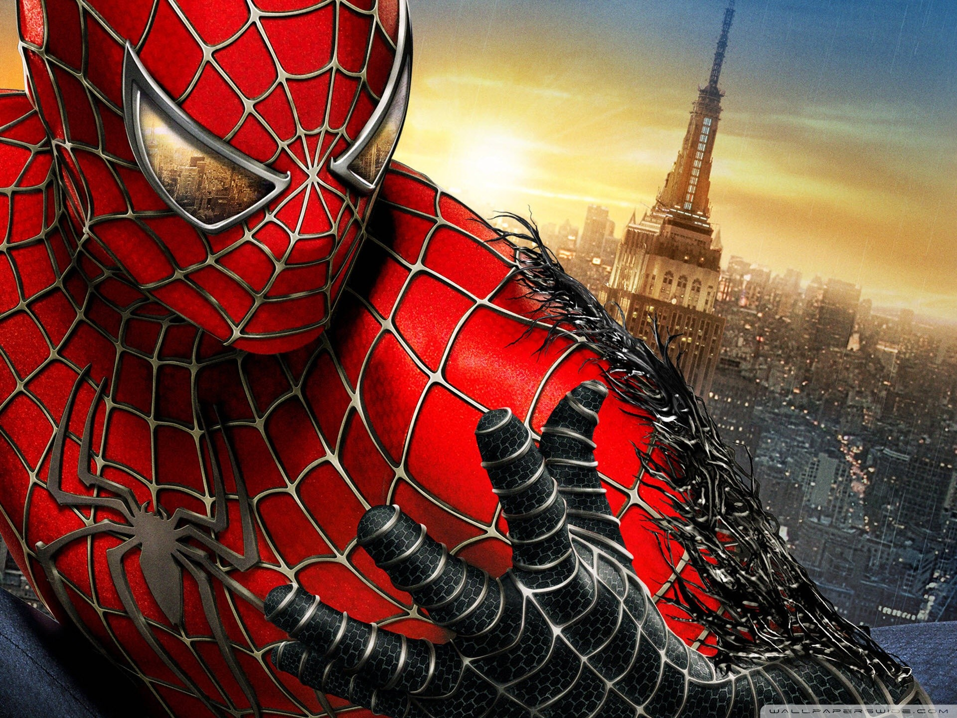 Spider HD Wallpapers Backgrounds Wallpaper