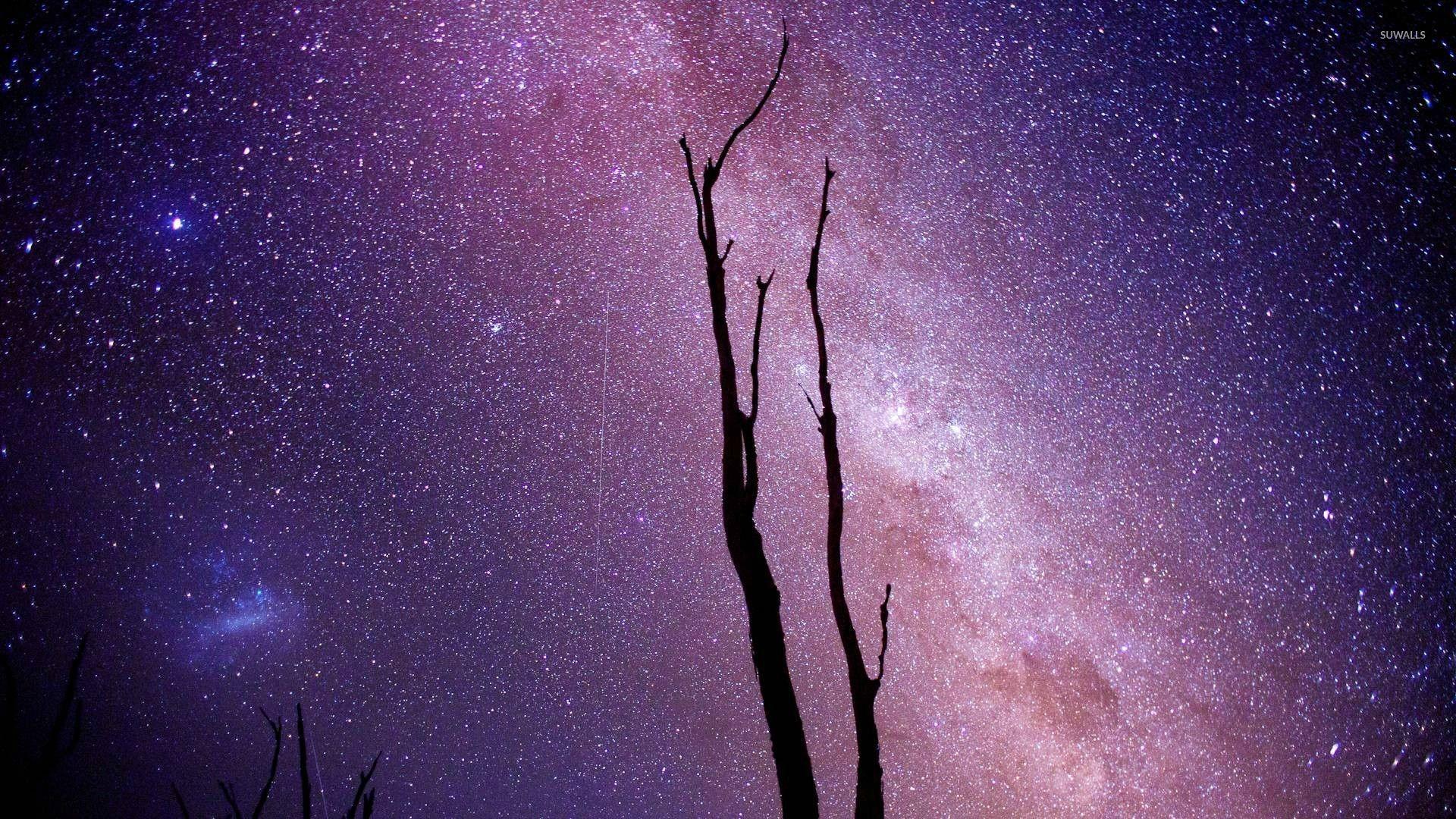 Milky Way above the trees wallpaper jpg