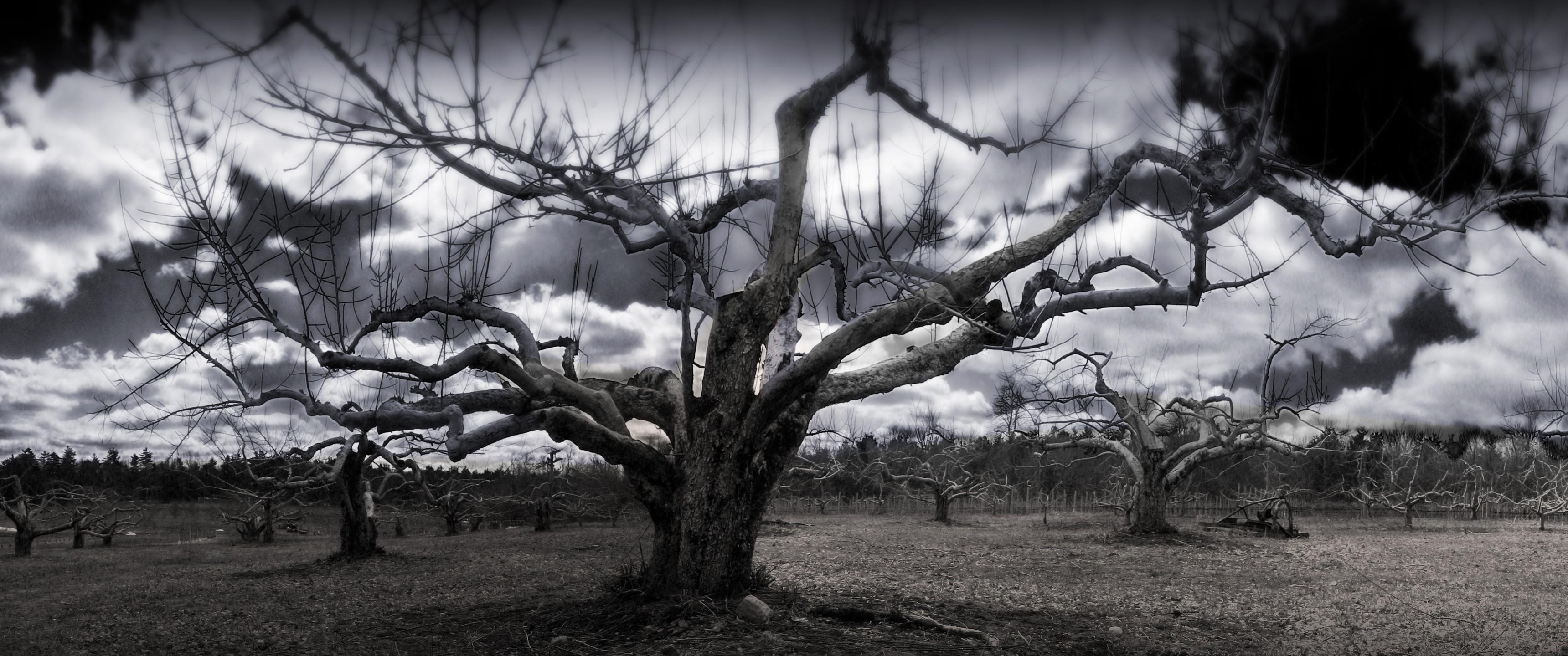 Dead Tree Dual Screen Wallpaper