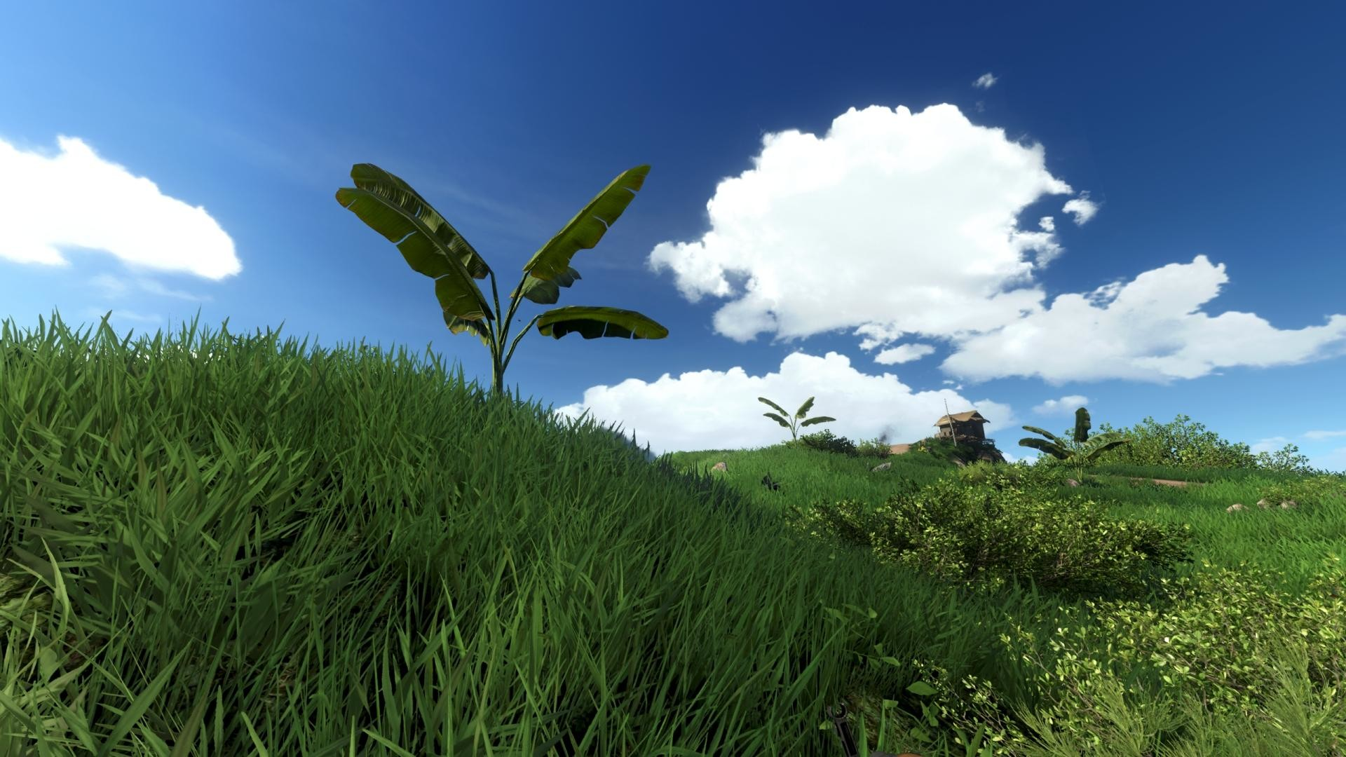 Far Cry 3 images