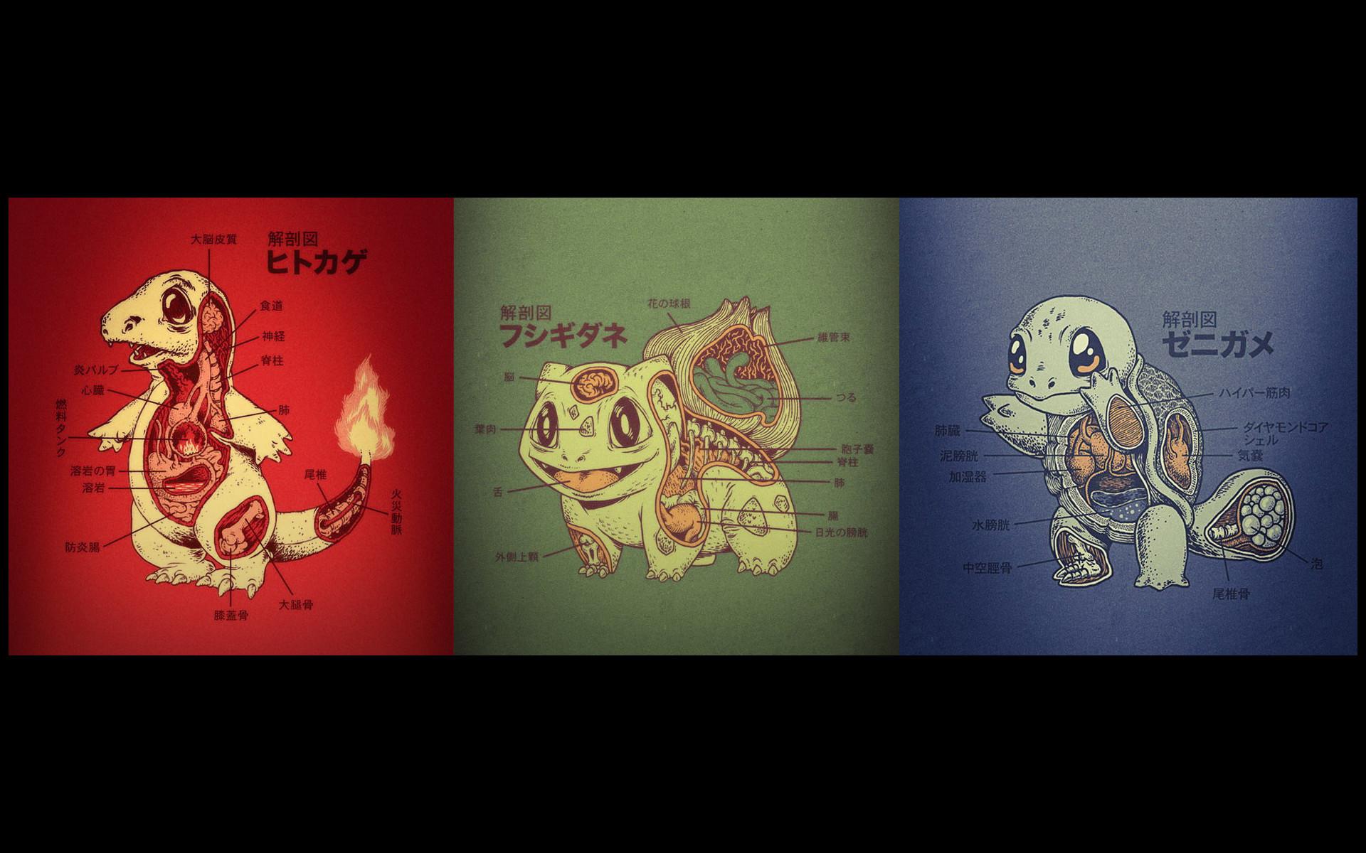 Pokemon Anatomy Charmander Bulbasaur Squirtle HD wallpaper thumb