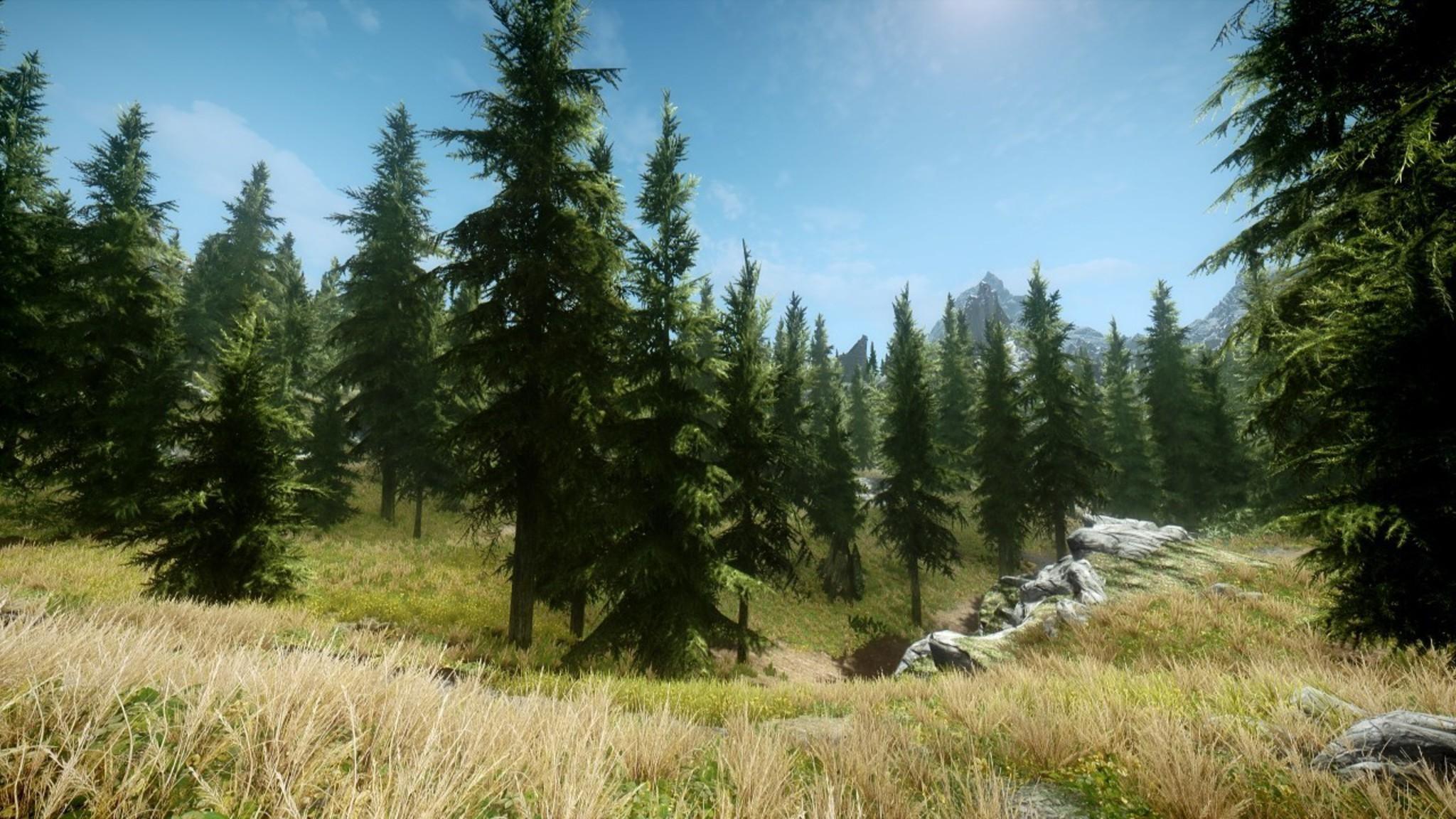 V: skyrim grass nature trees video games wallpaper .