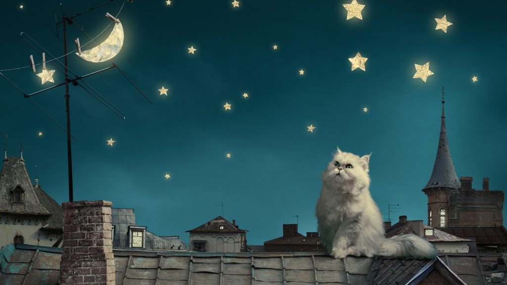 Moon And Stars Wallpapers Cat moon and stars wallpaper
