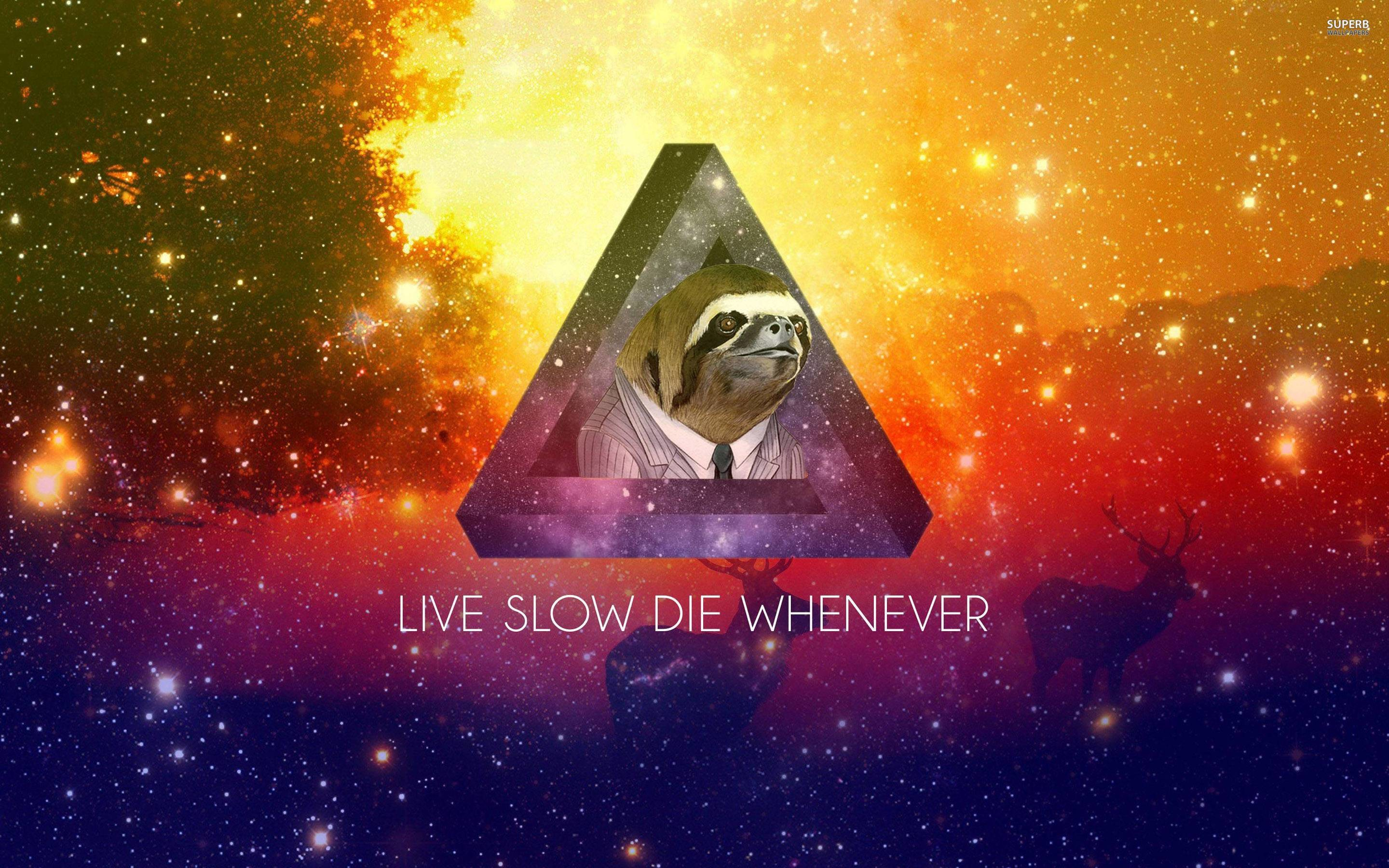 Sloth Wallpapers – Full HD wallpaper search