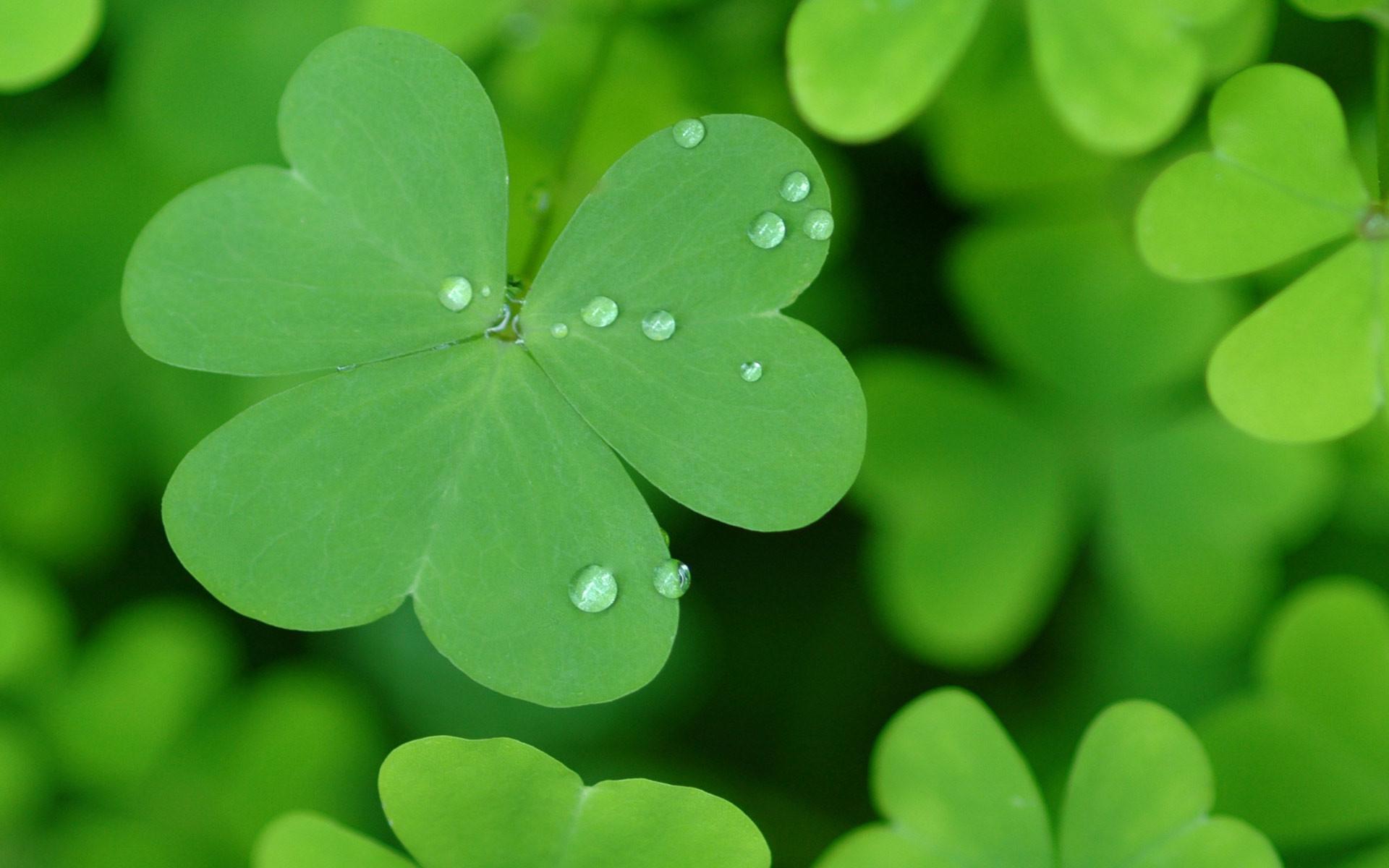 Image St Patricks Day