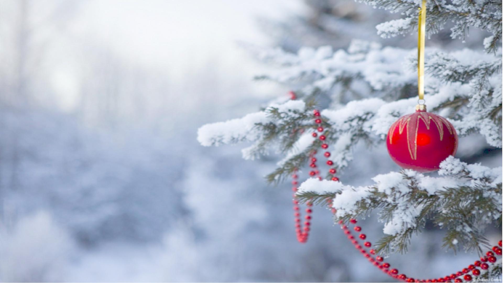 Photo Gallery: #4123115 Christmas Tree, 2338.64 Kb