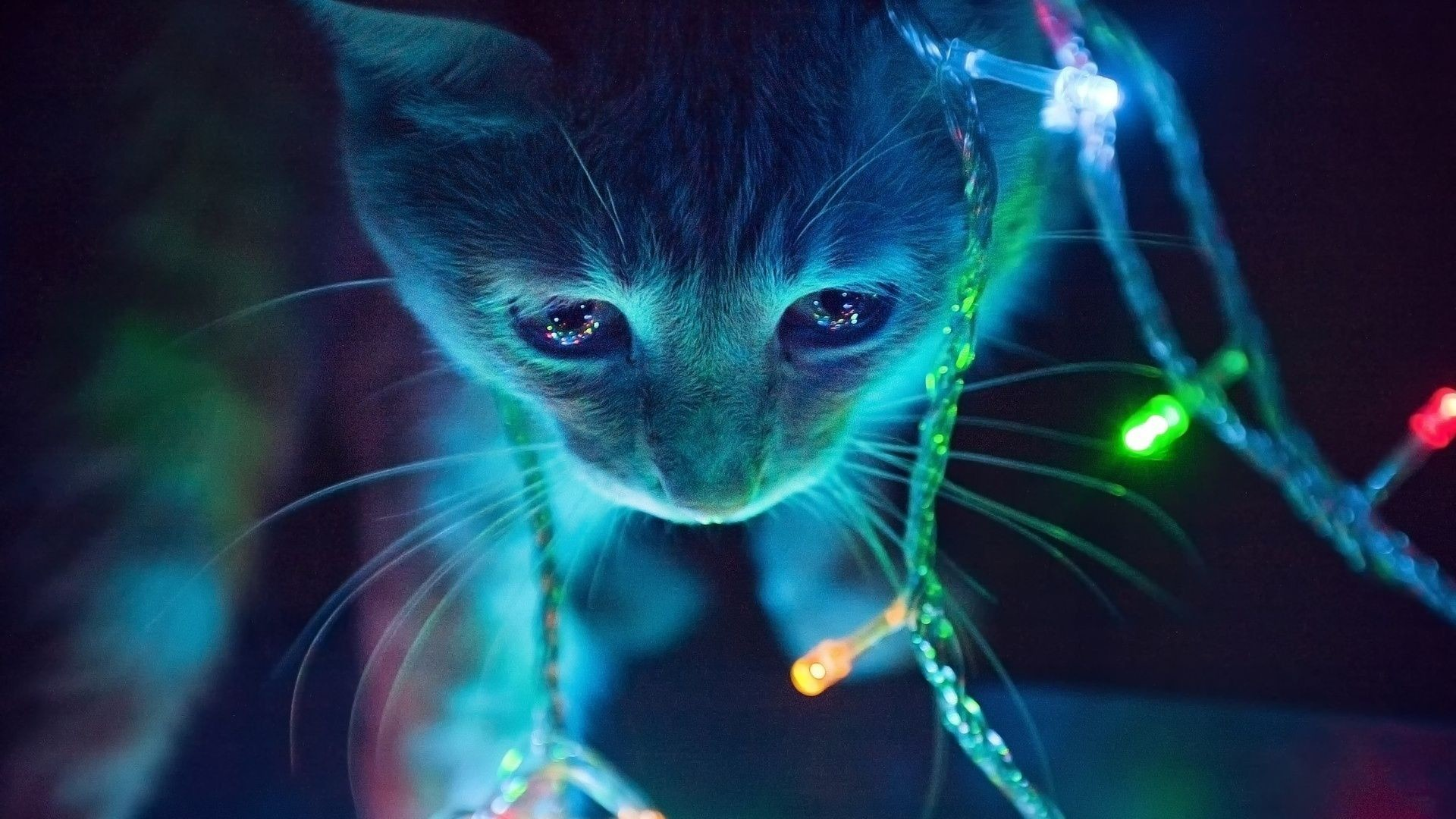 Christmas Lights Cat desktop PC and Mac wallpaper