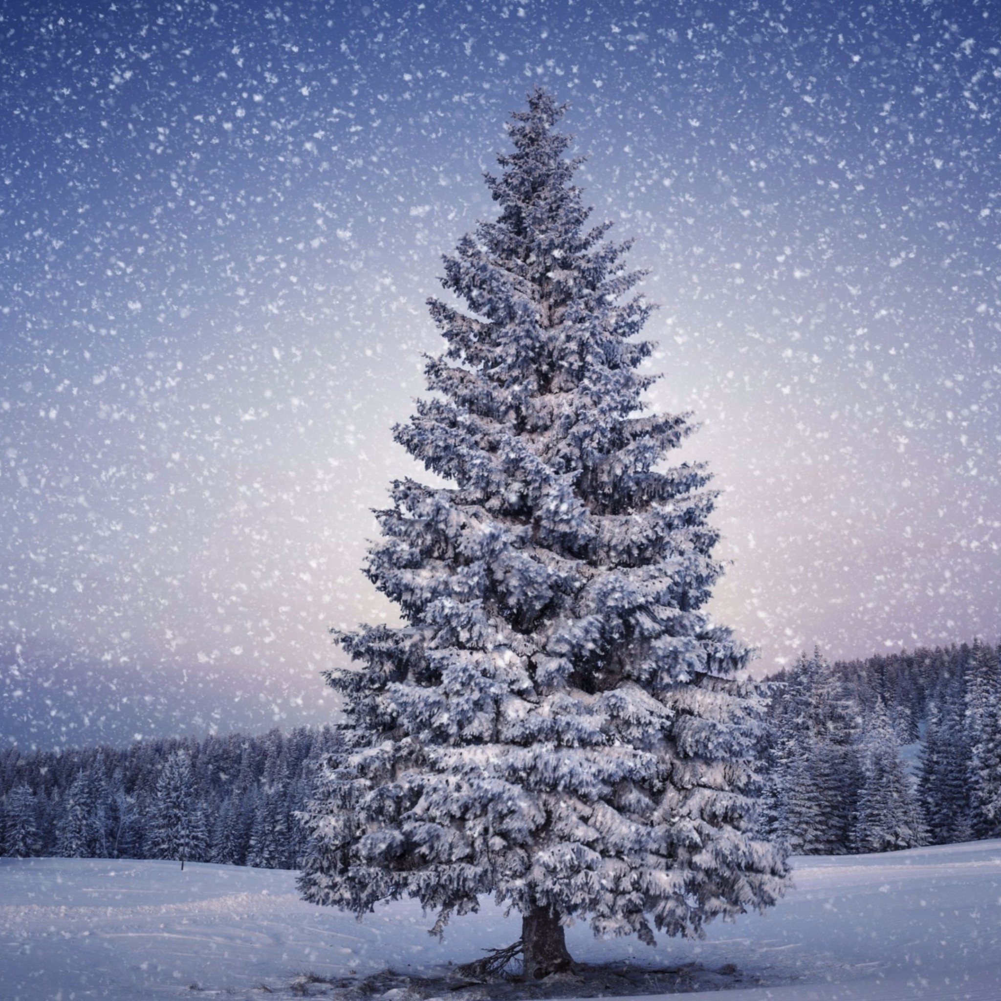 Related to Snowy 2016 Merry Christmas 4K Wallpaper