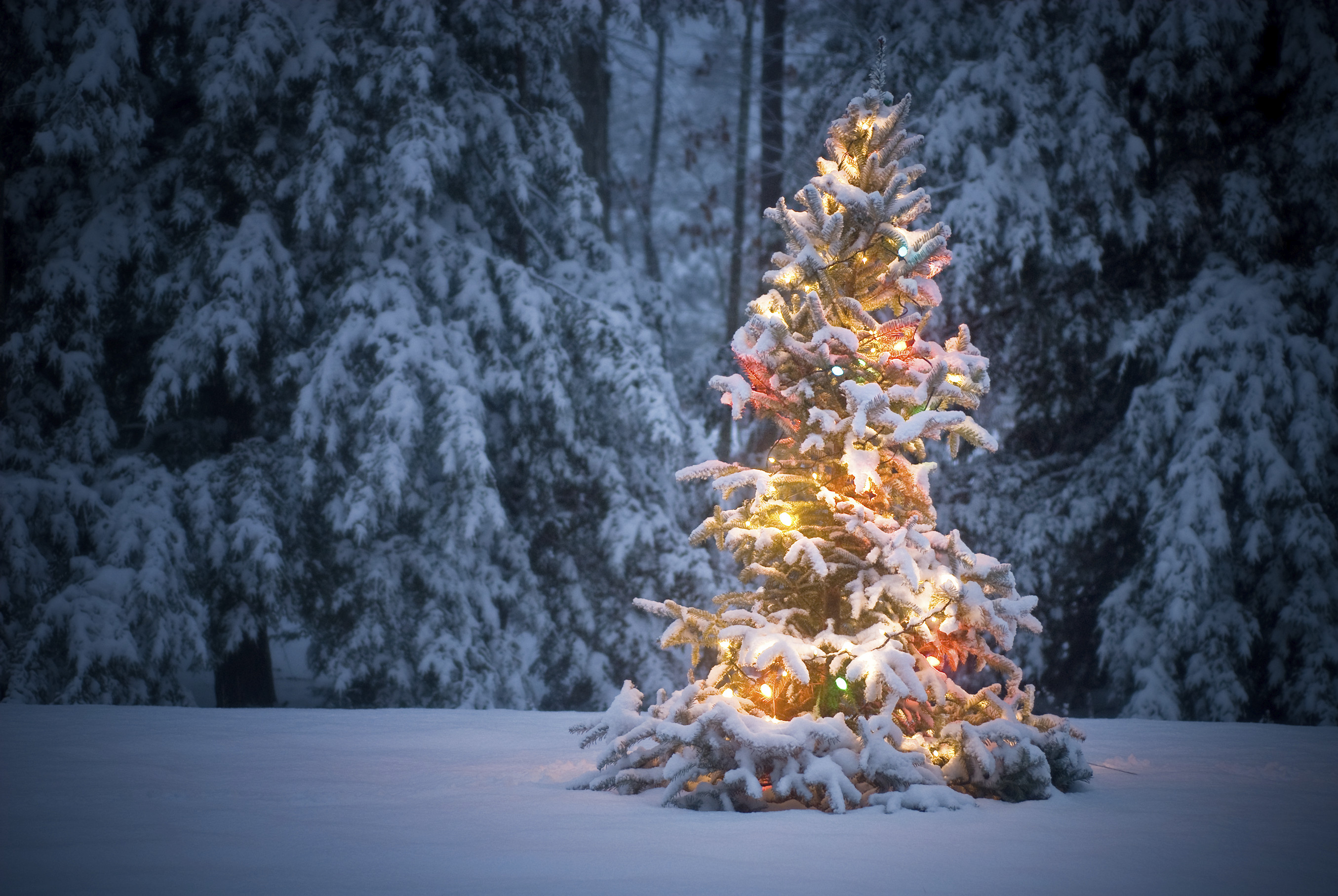 New Year, Bell, Ribbon, Christmas Tree, Snow Wallpapers HD .