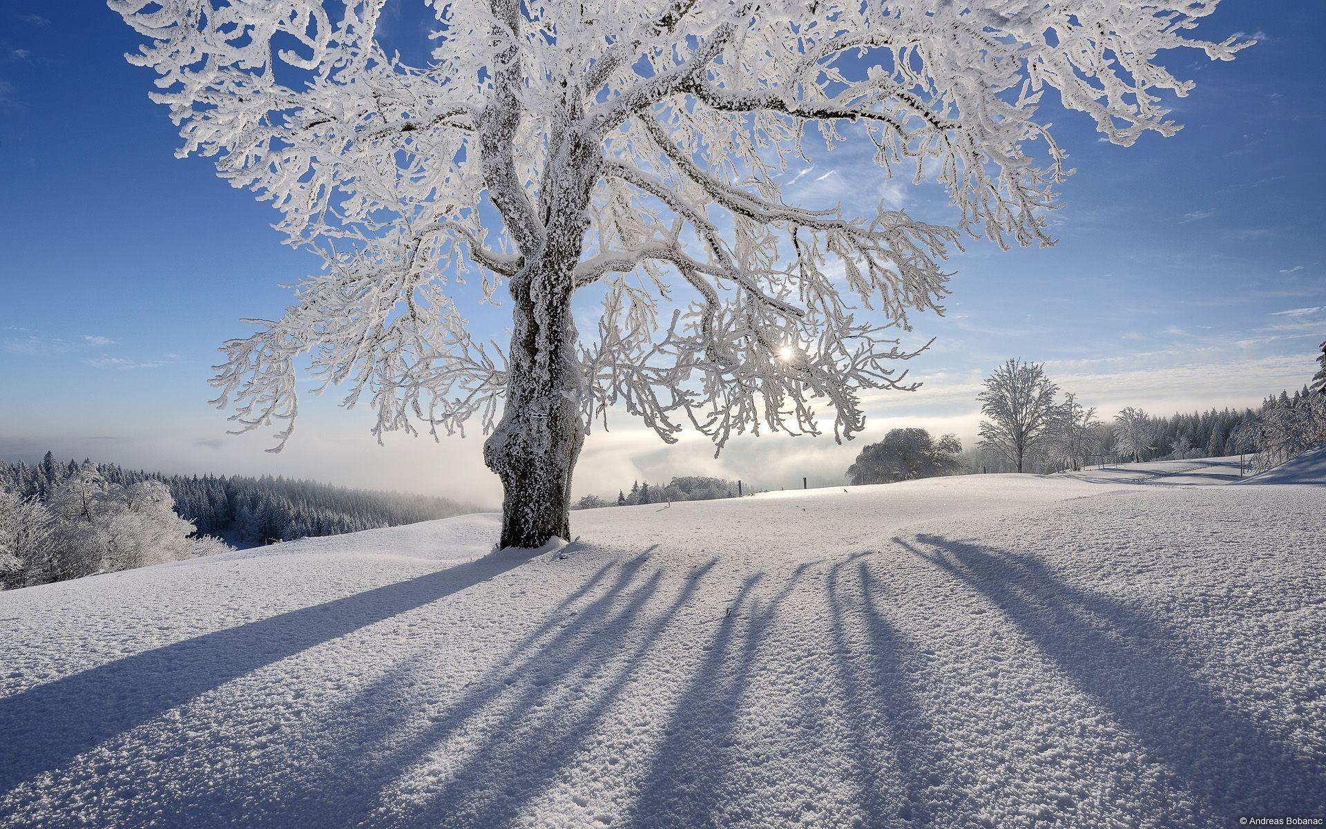 winter-and-christmas-desktop-backgrounds-for-mac.jpg