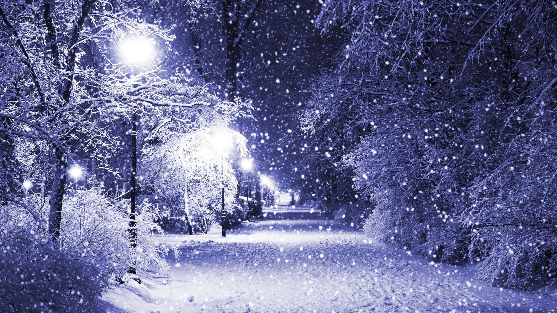 Merry Tag – Quiet Merry Snow Evening Christmas Eve Peaceful Night Park  Nature Lights White Forever
