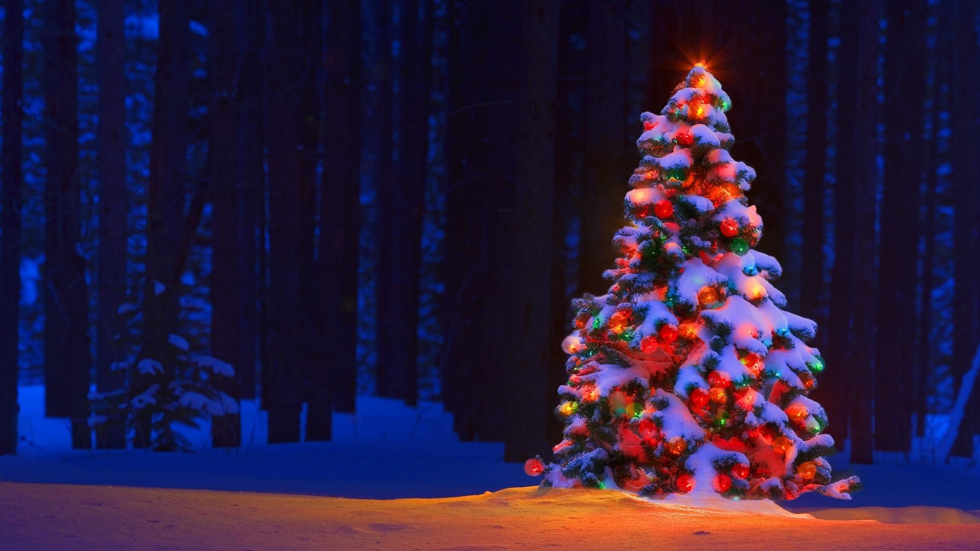 Christmas Lights Tree Desktop Backgrounds