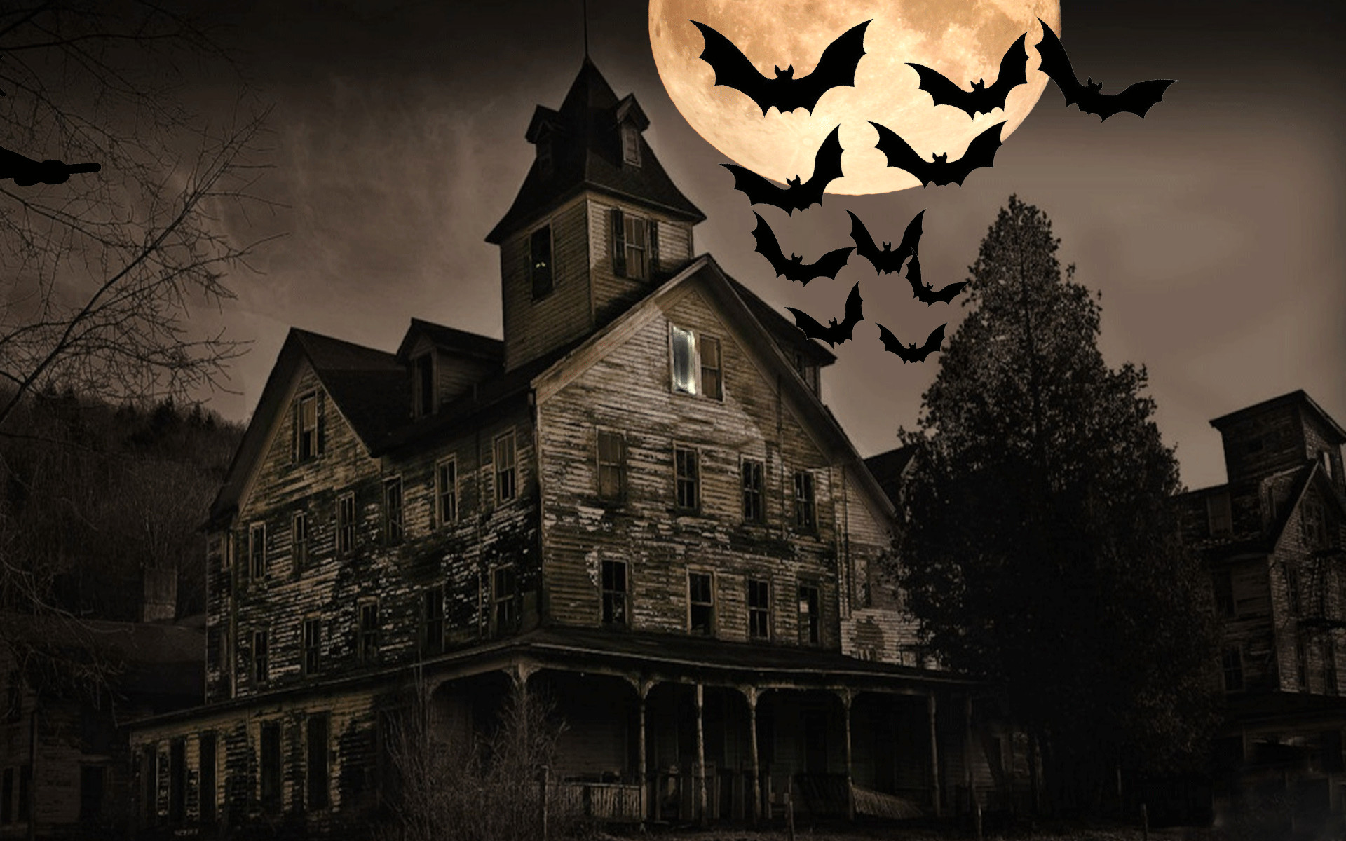 animaatjes halloween 50125; witchandbats witchandbats:  c7877759db9907cdfc69c9a710be8f17 d6sh8yc