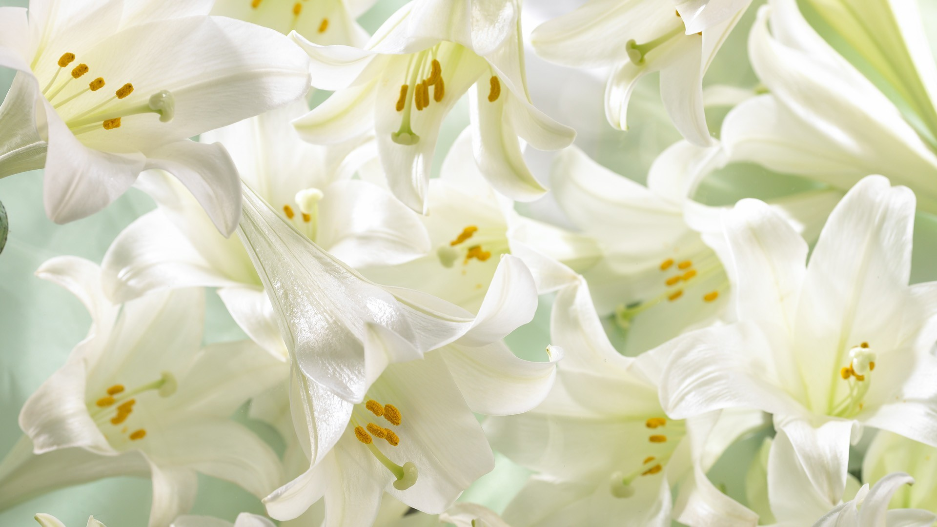 Easter Lilies Wallpaper Easter, Lilies