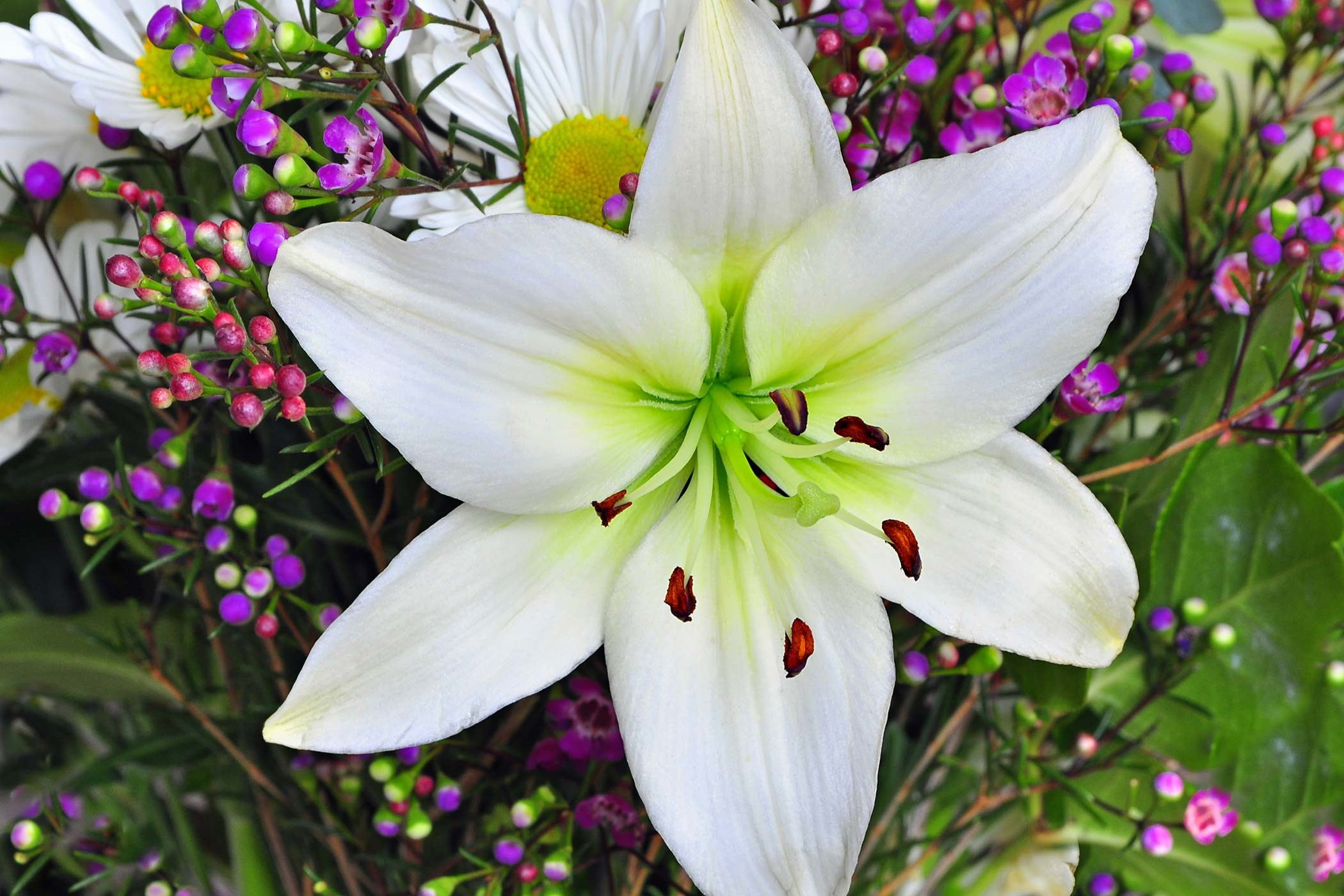 Lily Poisoning in Dogs Symptoms Causes Diagnosis Treatment