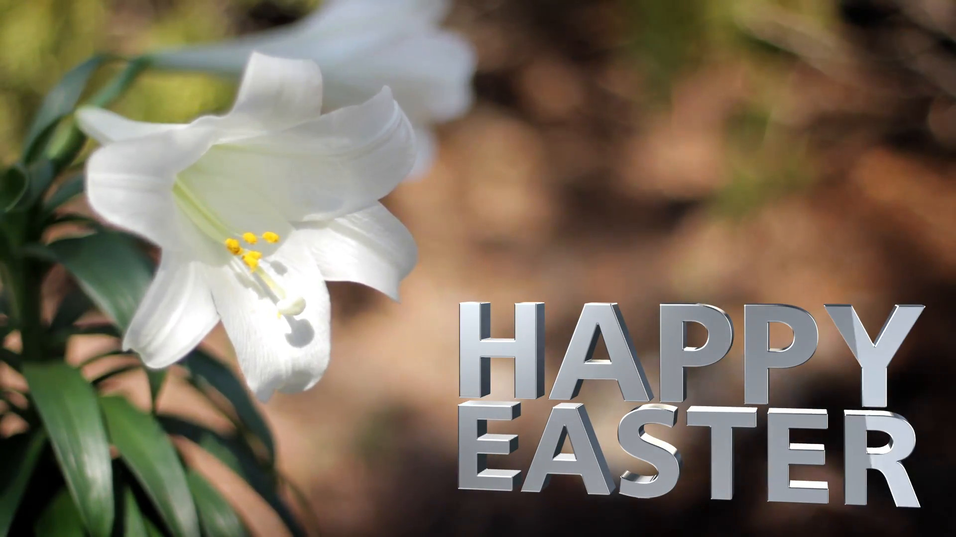 Easter Lilies in Breeze Happy Easter Text Motion Background – VideoBlocks