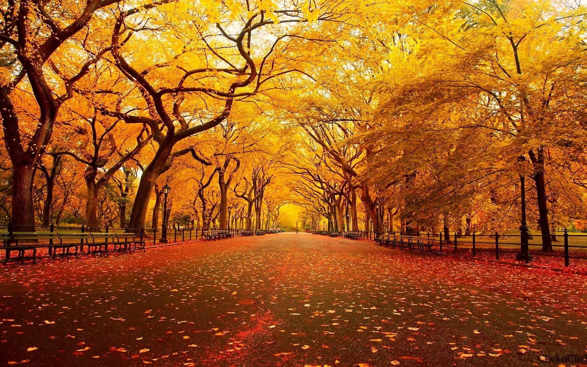 Thanksgiving Wallpaper Pictures M4B » WALLPAPERUN.COM