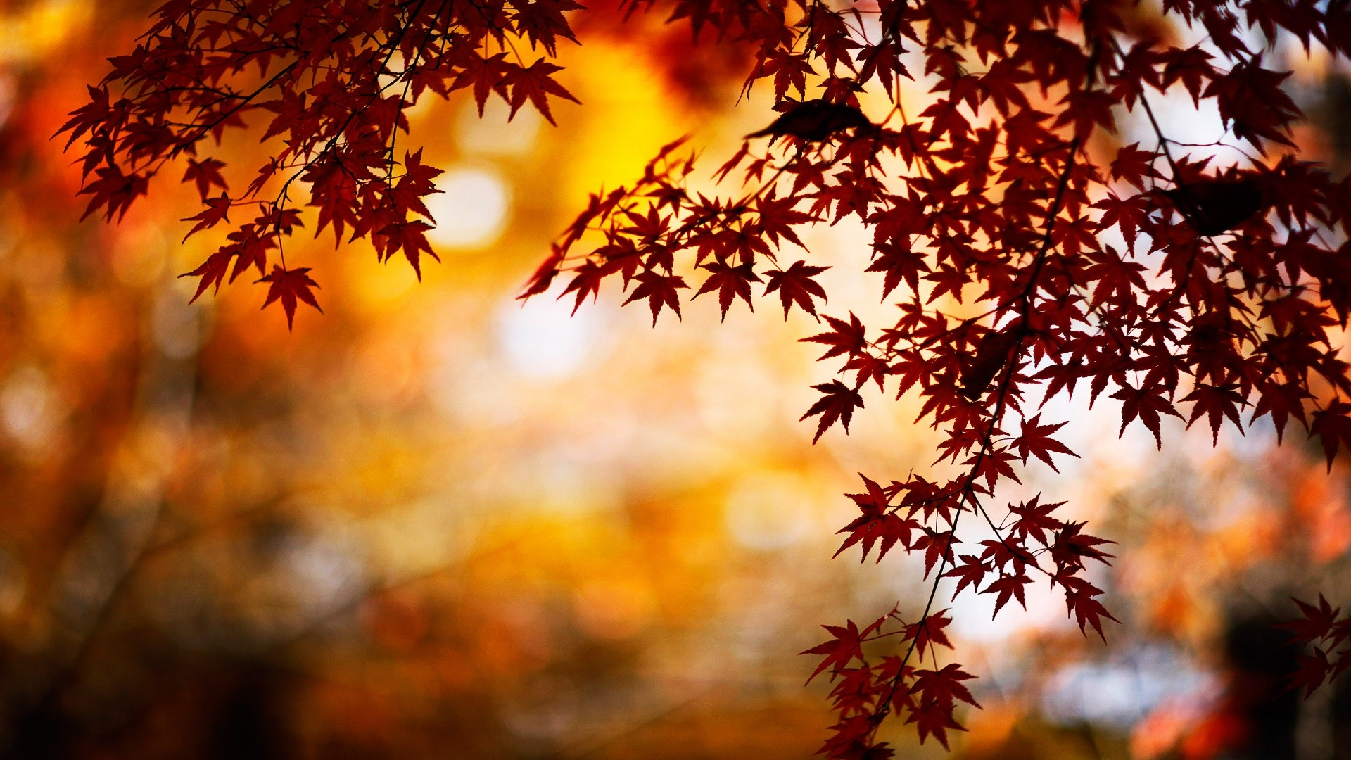 Wallpaper Fall nice hd wallpapers with red and orange colors